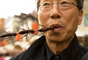 eating-insects-300x206