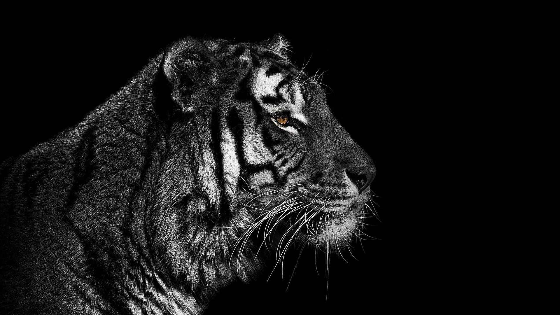 3d Ghost Wallpaper Free Download Black And White Tiger Wallpaper 60