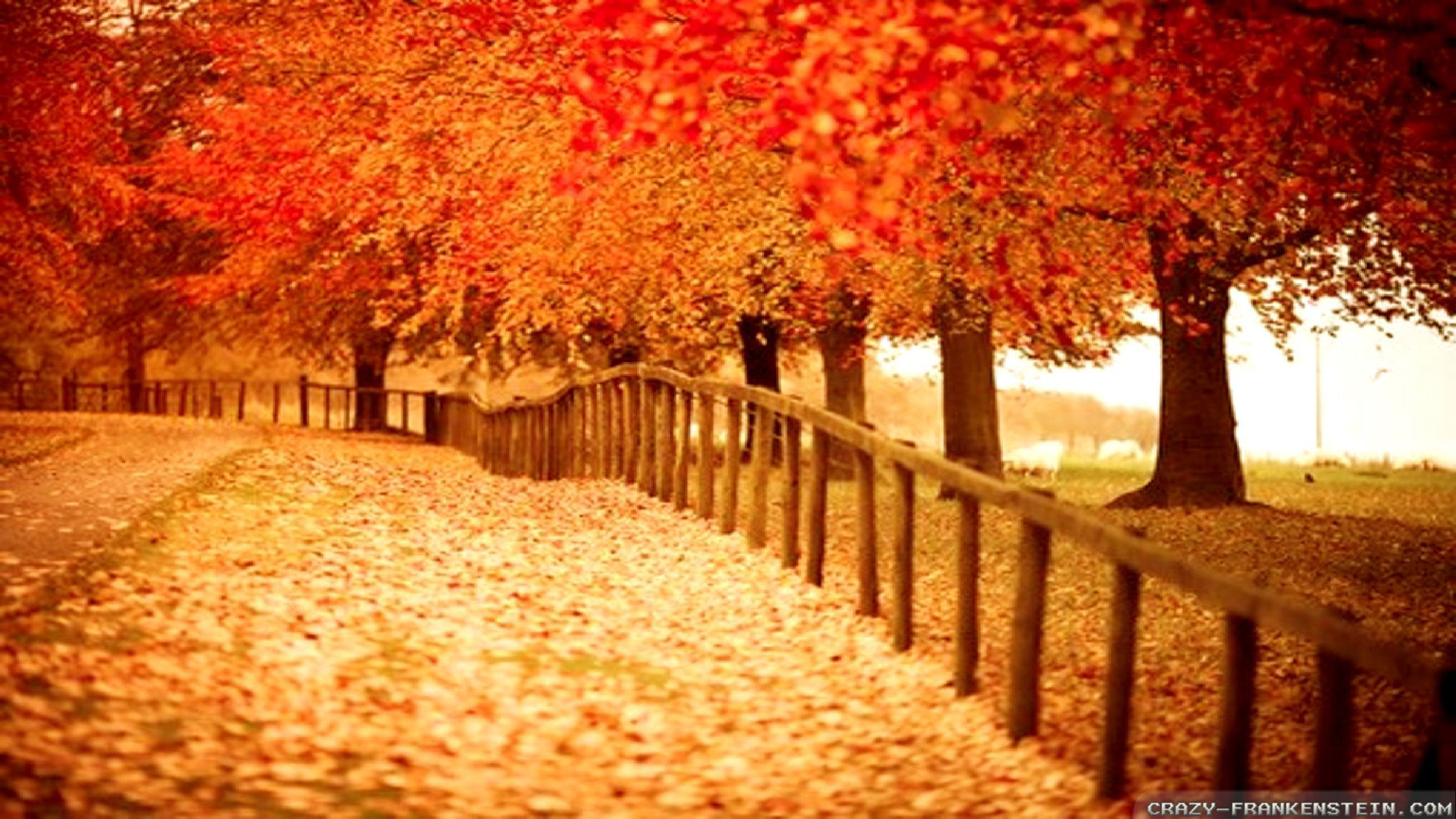 Fall Foliage Computer Wallpaper Fall Wallpapers For Desktop 64 Images