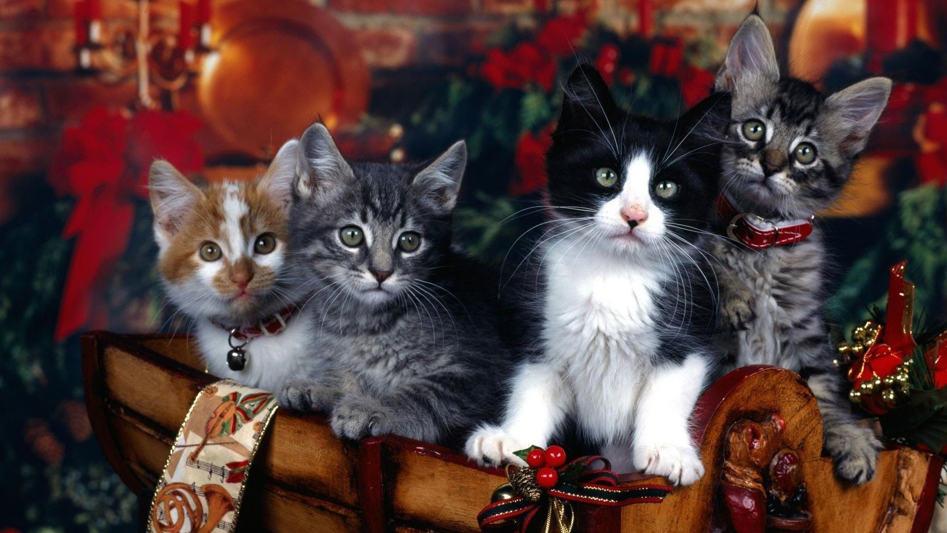 Cute Kitties Hd Wallpapers Christmas Wallpaper With Cats 55 Images