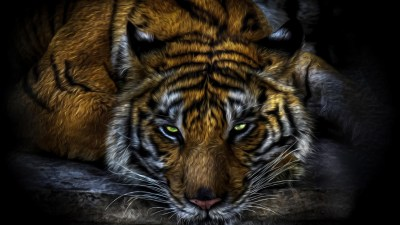 Cool Wallpapers of Tigers (54+ images)