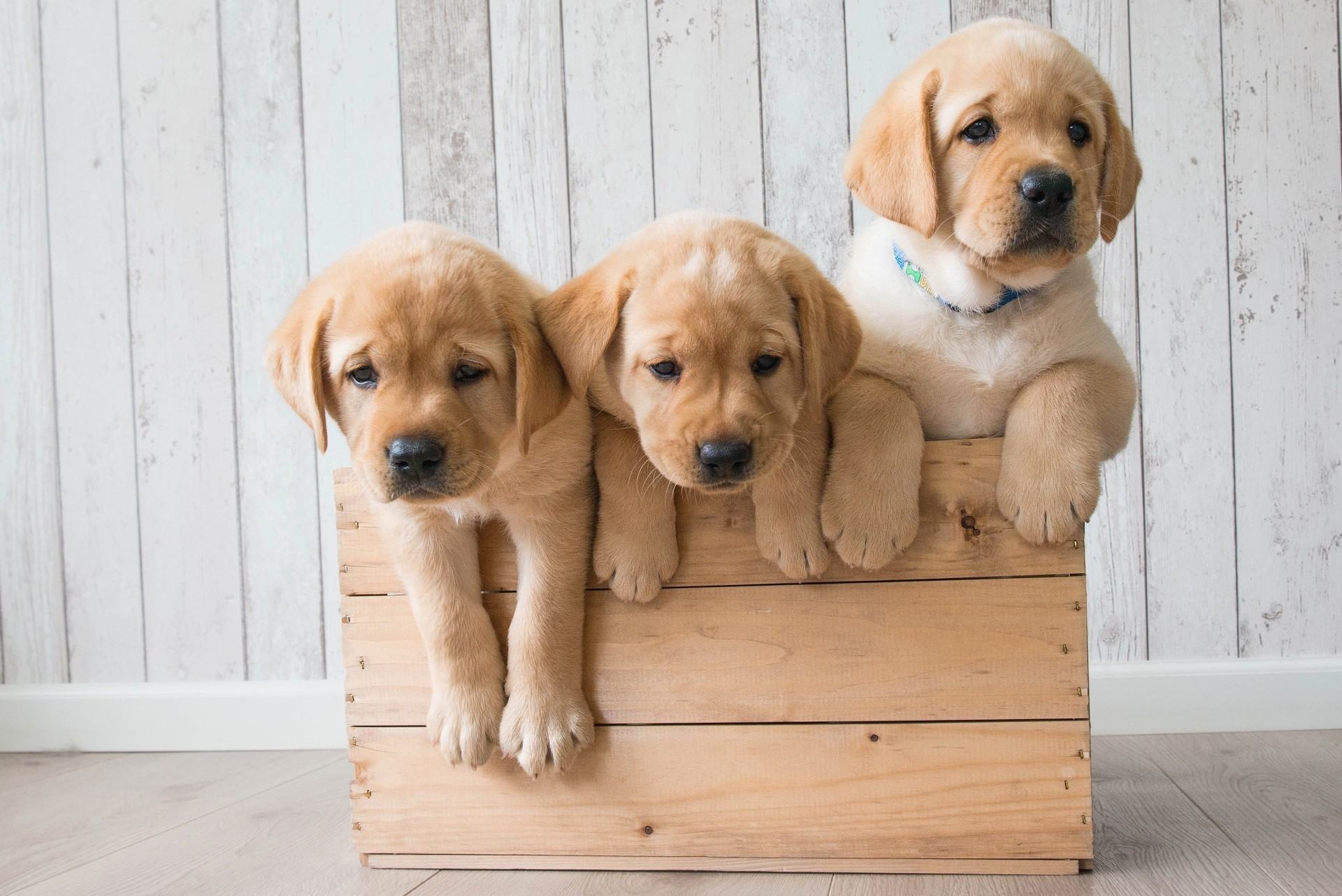 Cute Puppies Wallpaper 1080p Cute Puppies Wallpaper Hd 55 Images