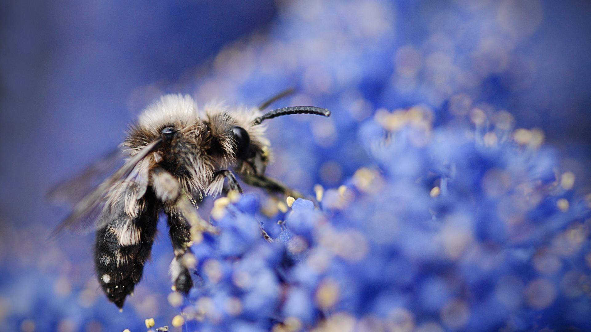 Galaxy S8 Wallpaper Hd Bee Wallpaper 64 Images
