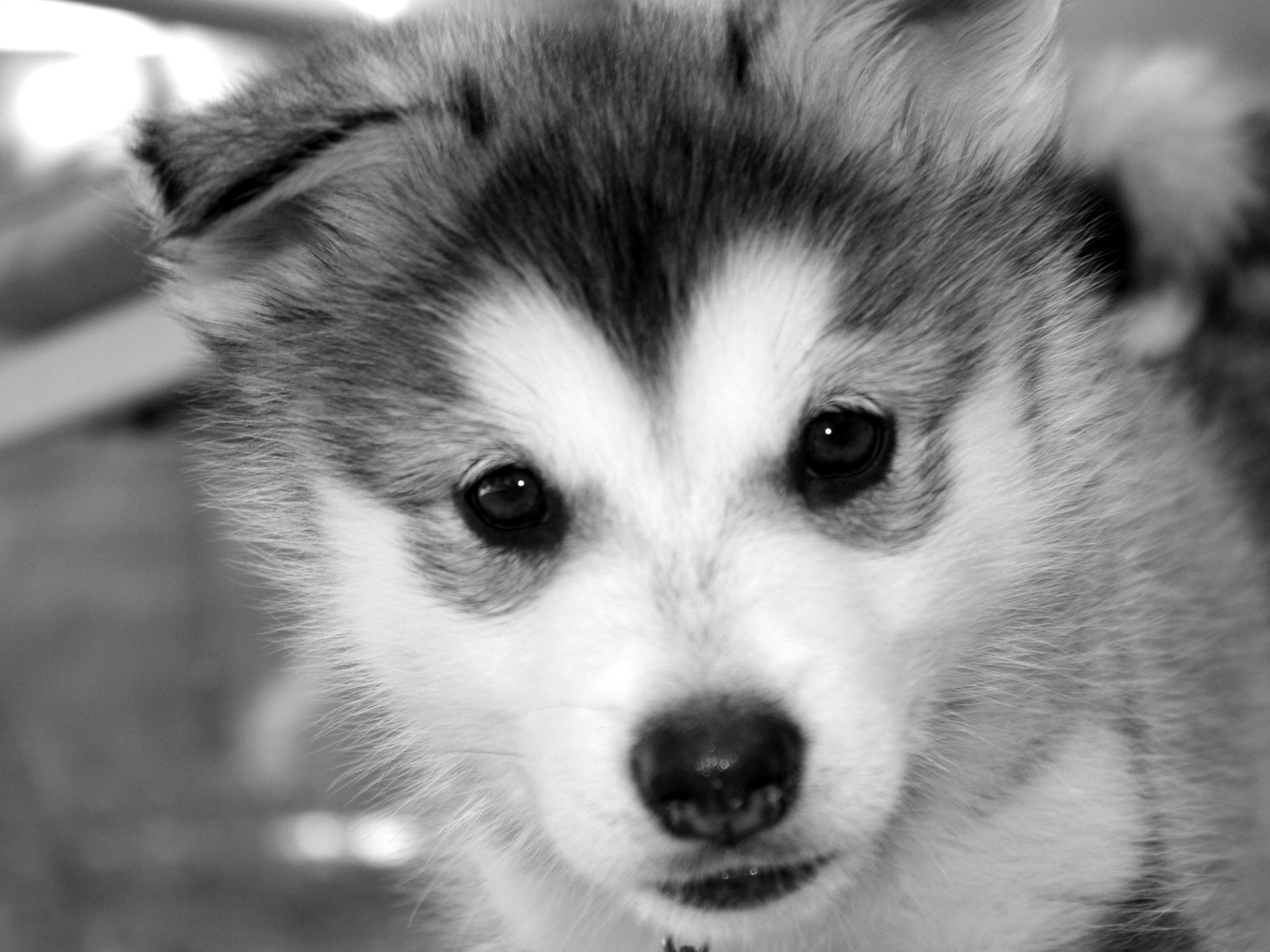 Cute Dog Iphone Wallpaper Baby Dogs Wallpapers 54 Images