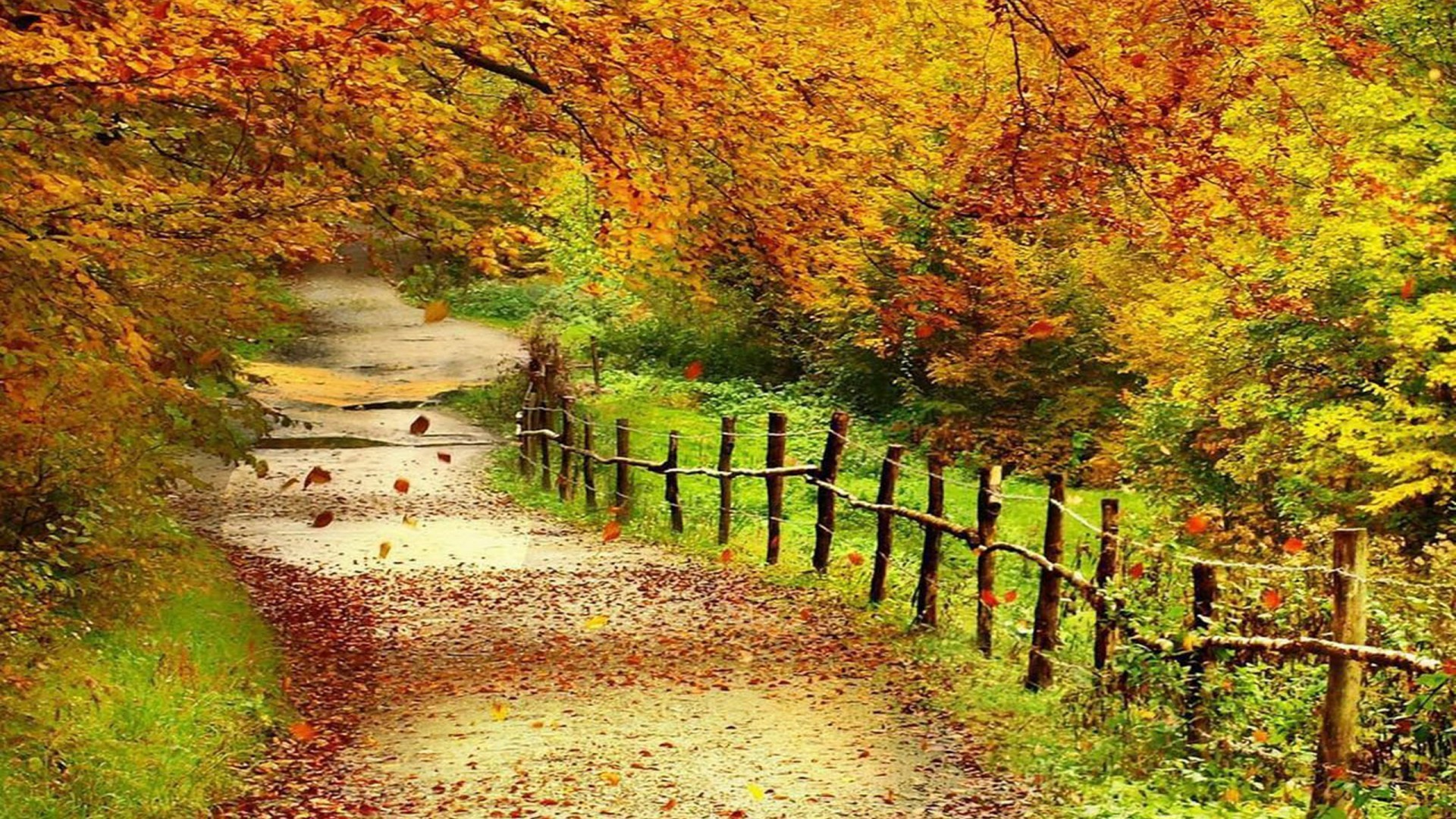 Fall Leaves Live Wallpaper Iphone Autumn Scenery Wallpaper 57 Images
