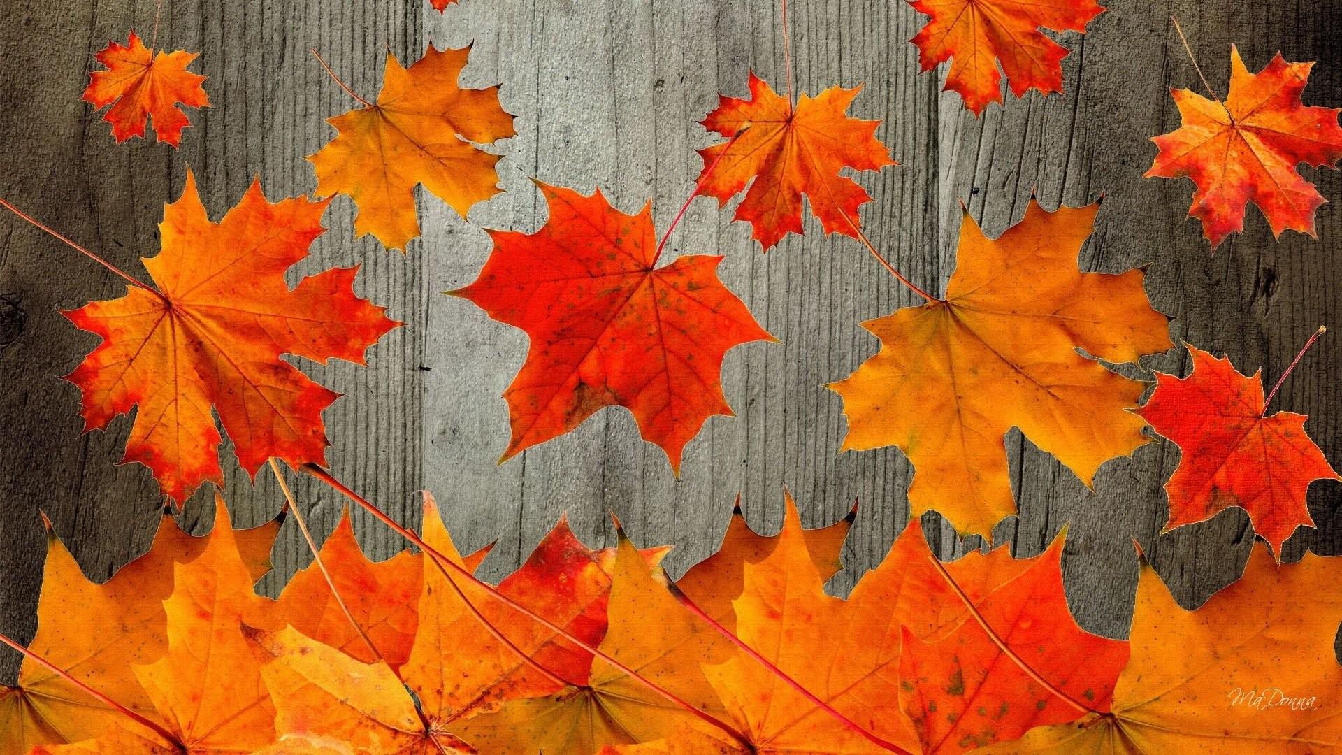 Fall Tree Desktop Wallpaper Fall Wallpaper For Desktop 1920x1080 60 Images