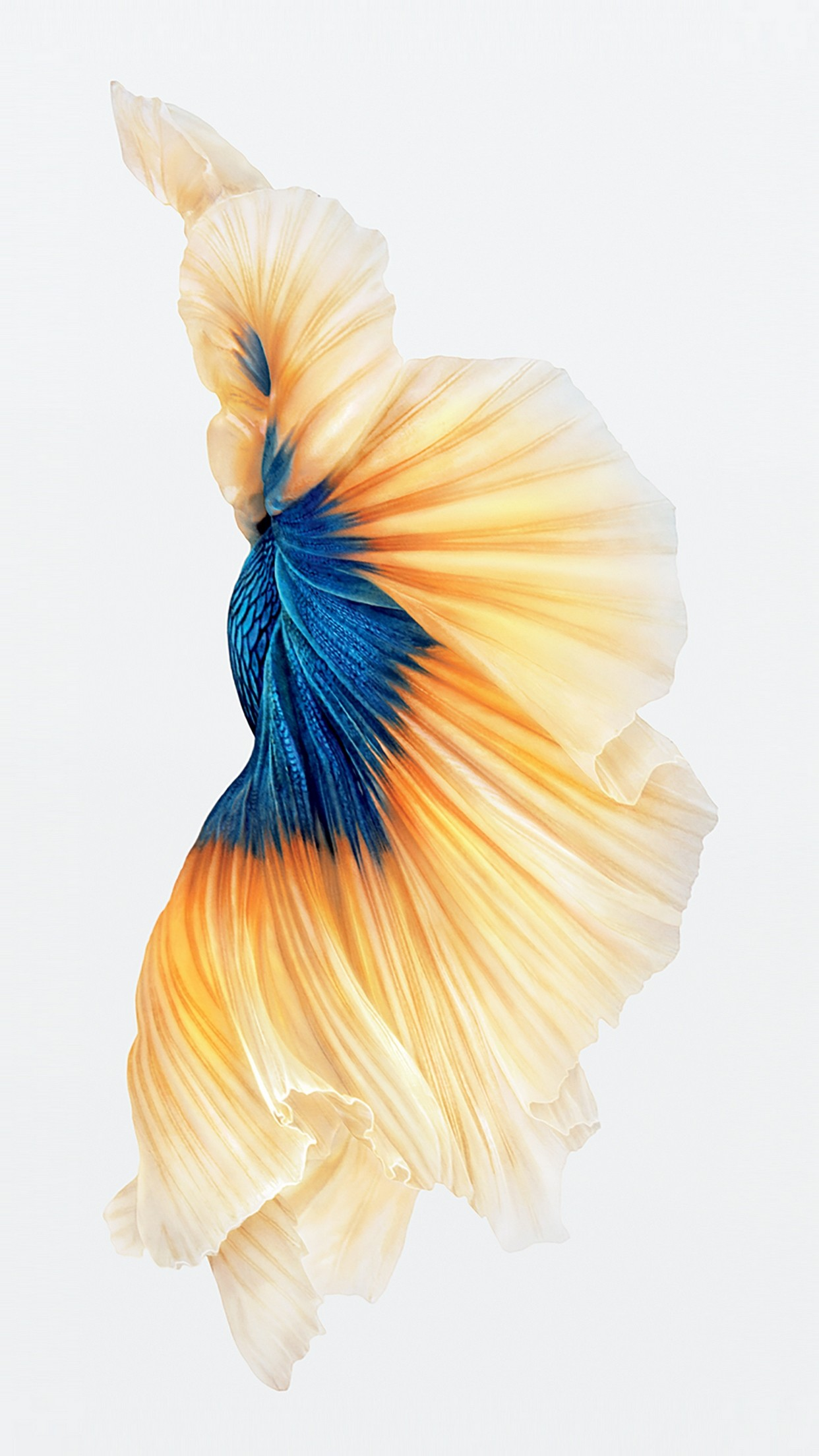Macbook Animated Wallpaper Iphone 6s Fish Wallpapers 75 Images