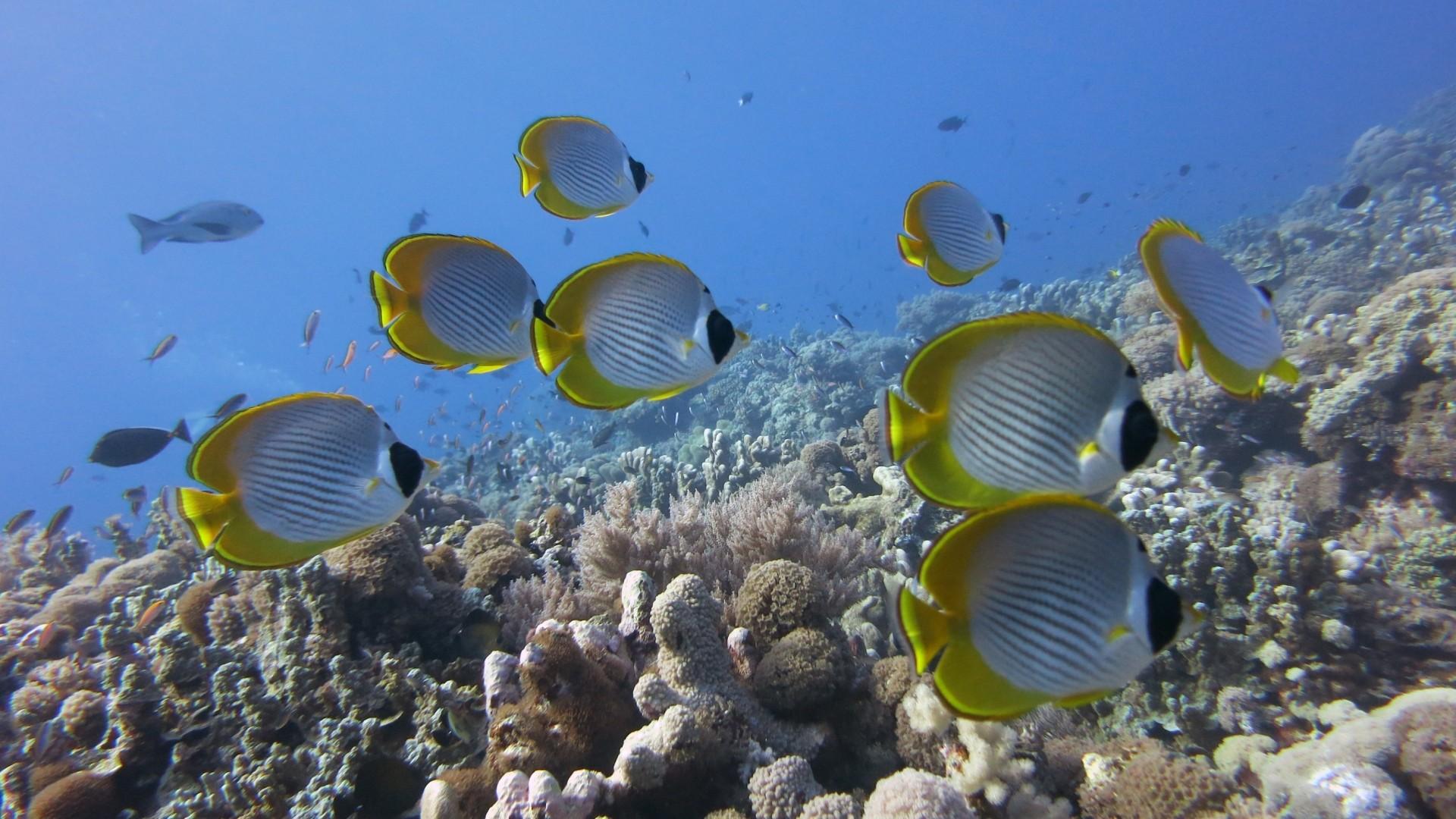 Tropical Ocean 3d Live Wallpaper Fish Wallpaper And Screensavers 58 Images