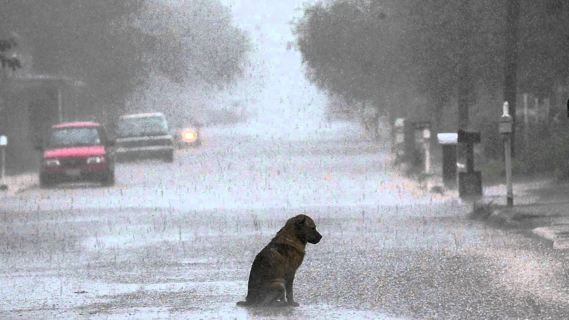 Very Sad Alone Girl Hd Wallpaper Seattle Rain Wallpaper 72 Images