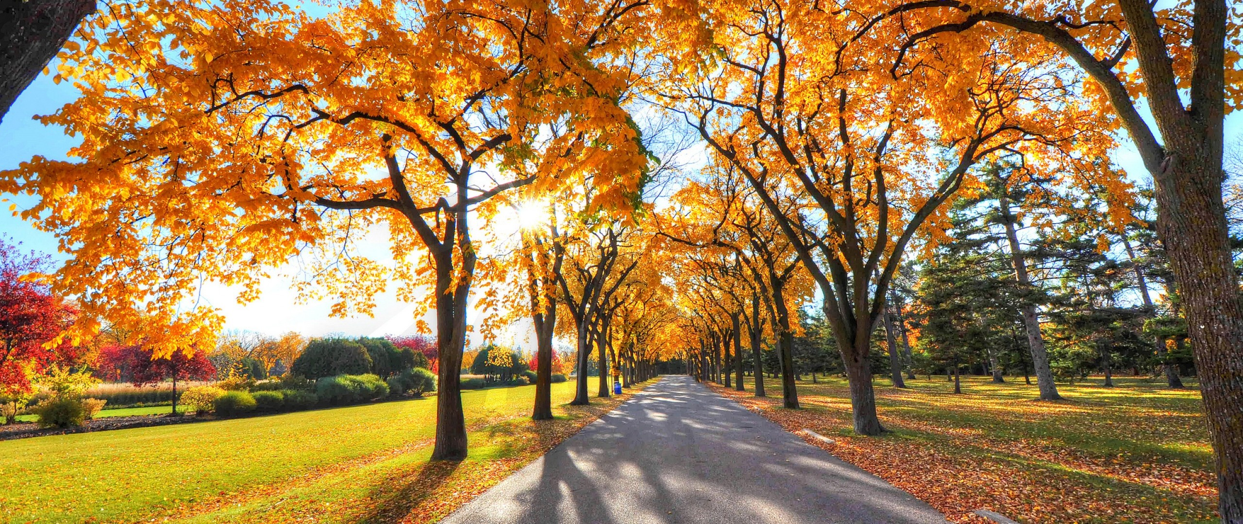 Falling Leaves Wallpaper For Iphone Autumn Screen Wallpaper 64 Images