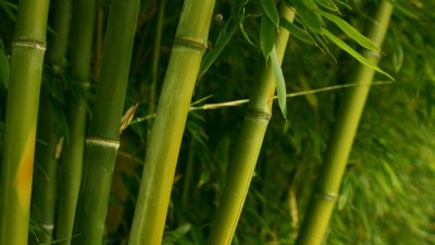 Bamboo Desktop Wallpaper (57+ images)