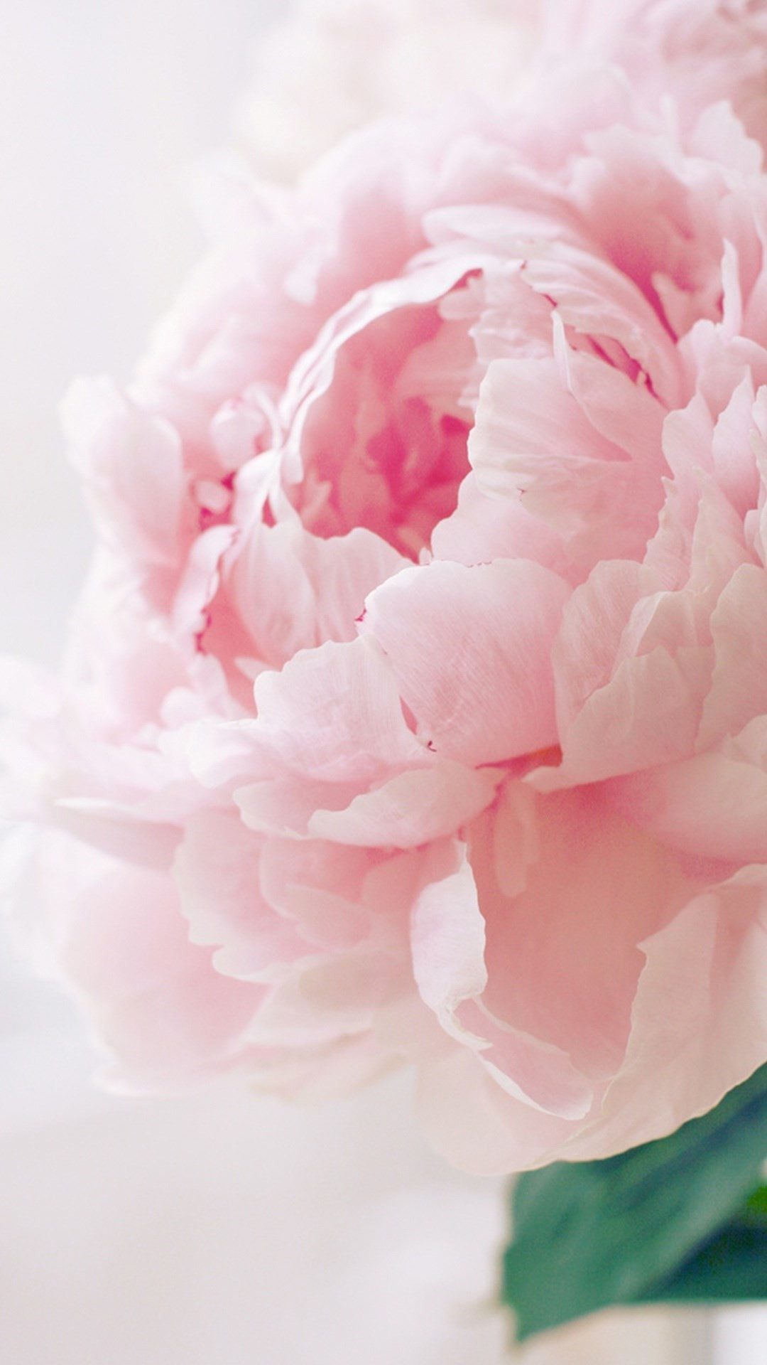 Peonies Wallpaper Iphone 6 Pink Peony Wallpapers 57 Images
