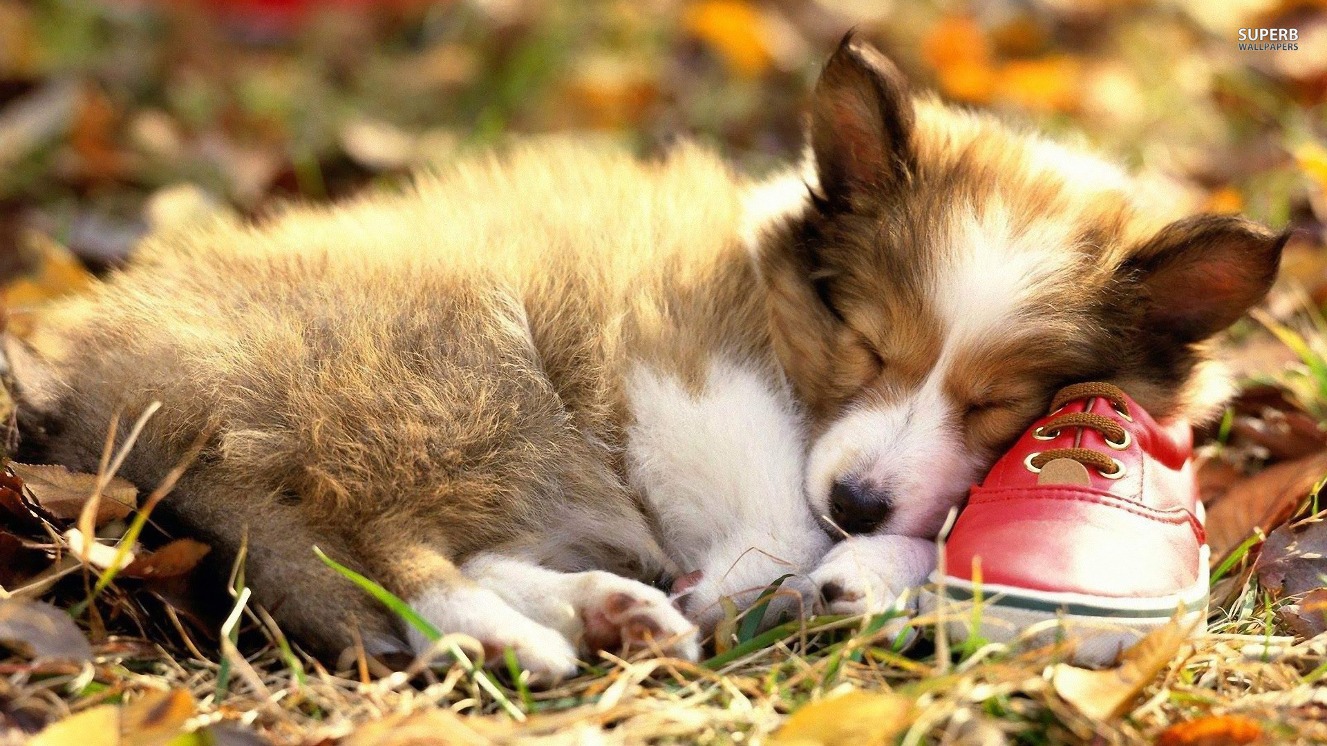 Cute Puppies Wallpapers For Mobile Puppy Wallpapers For Desktop 67 Images