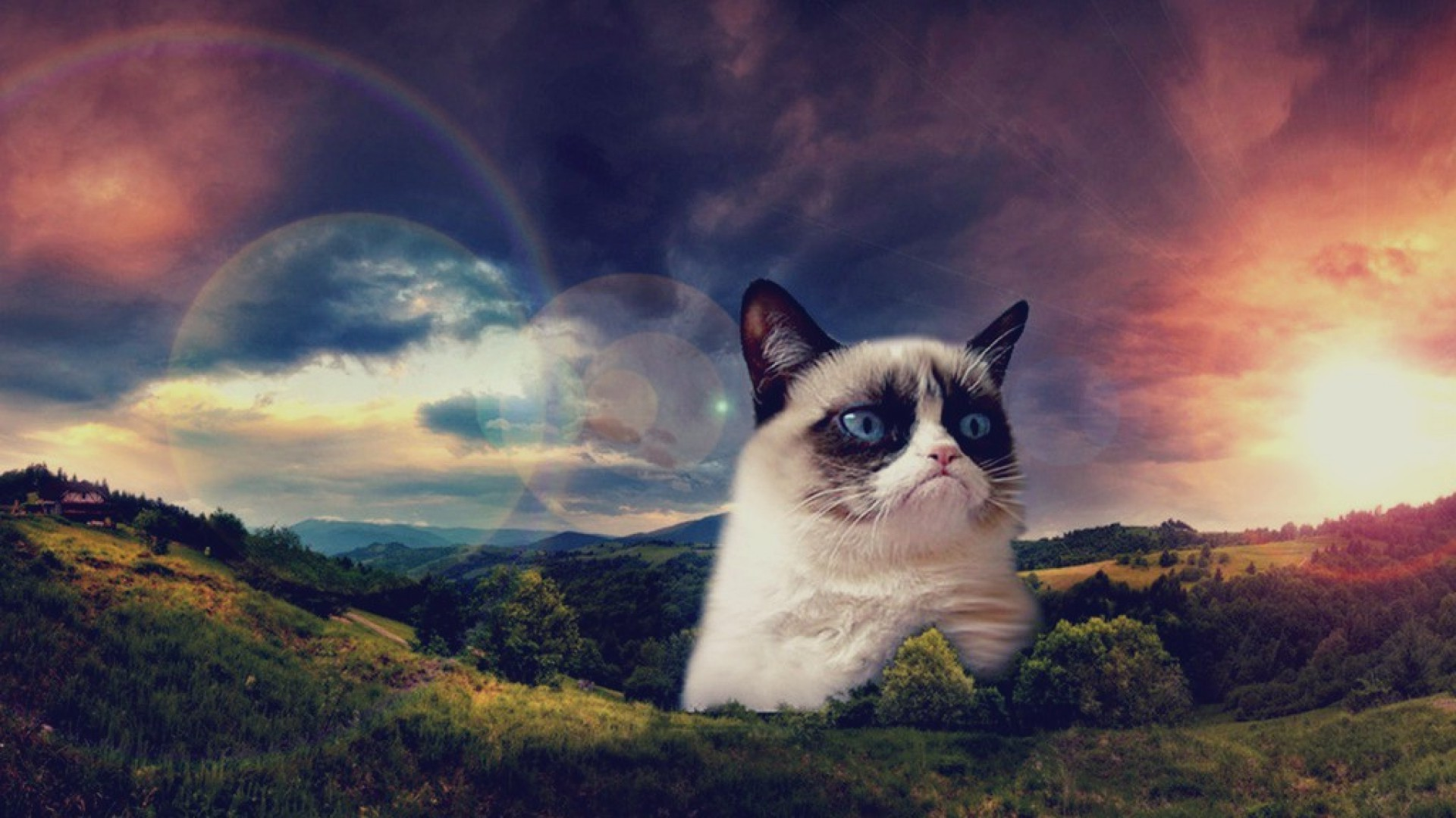 Hd Wallpapers Cars For Iphone Grumpy Cat Wallpapers Hd 61 Images