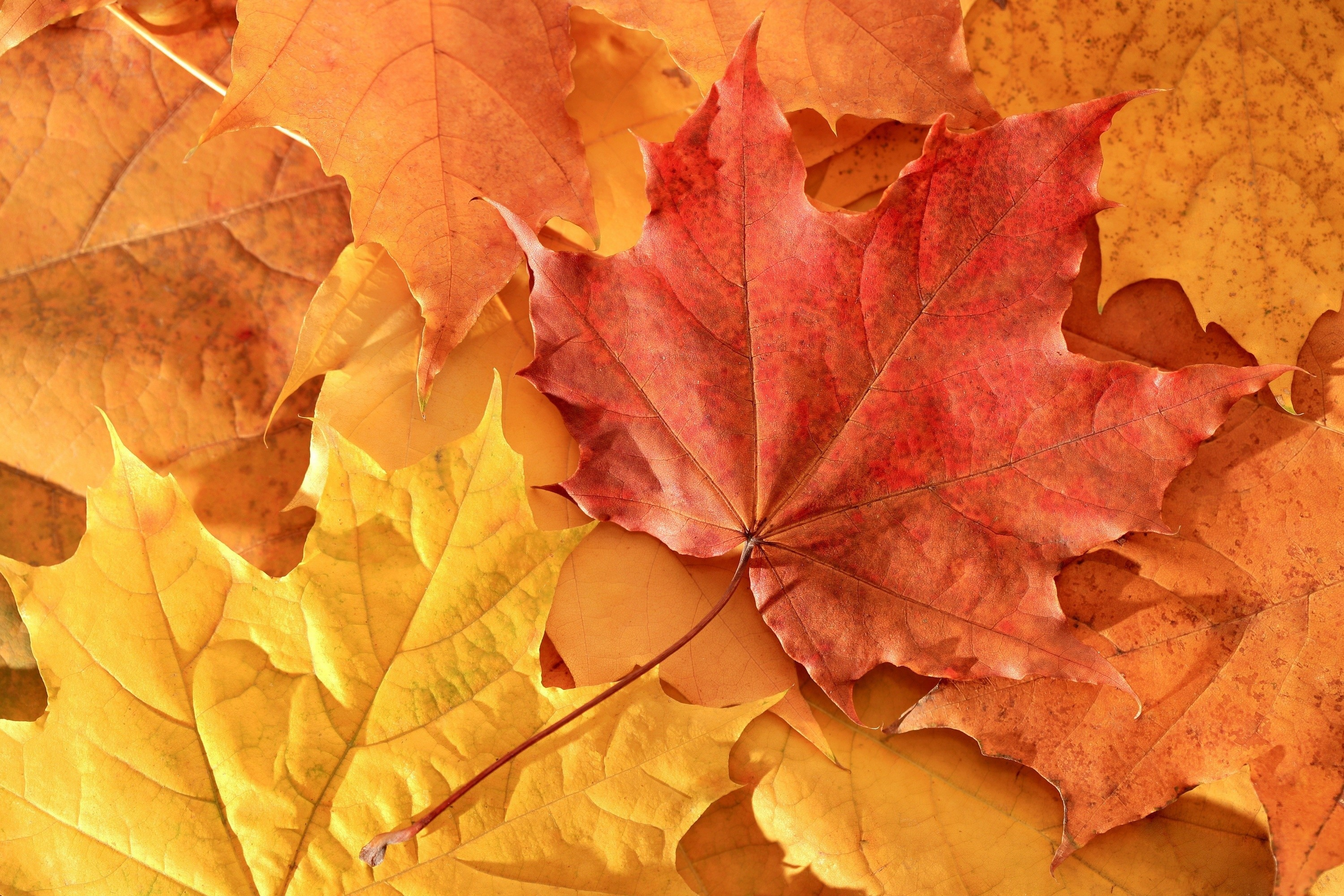 Drop Of Water Falling From A Leaf Wallpaper Autumn Leaf Wallpaper 68 Images