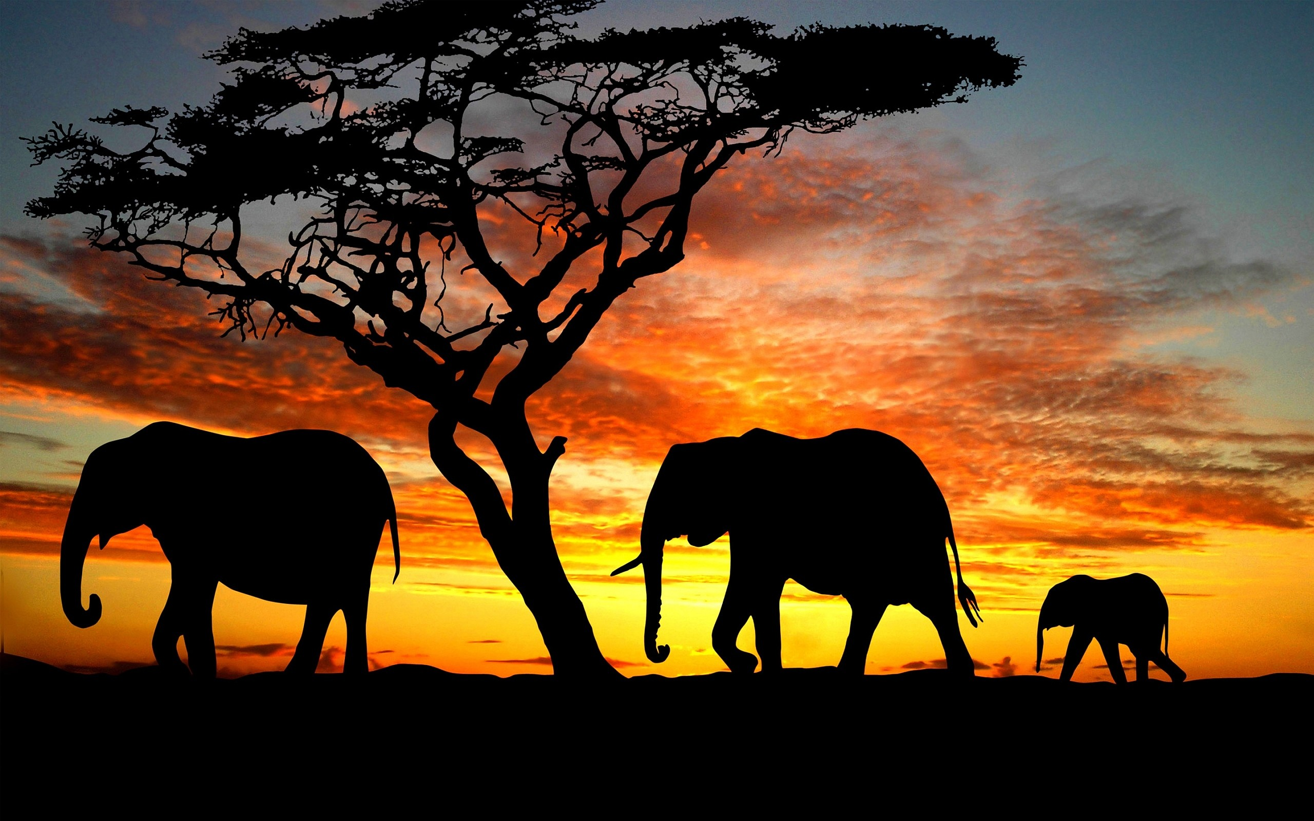 Cute Elephant Cartoon Wallpapers Baby Elephant Wallpaper 66 Images