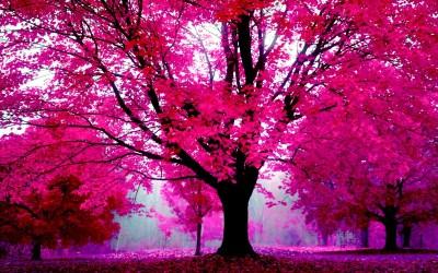 Pretty Pink Wallpaper for Desktop (58+ images)