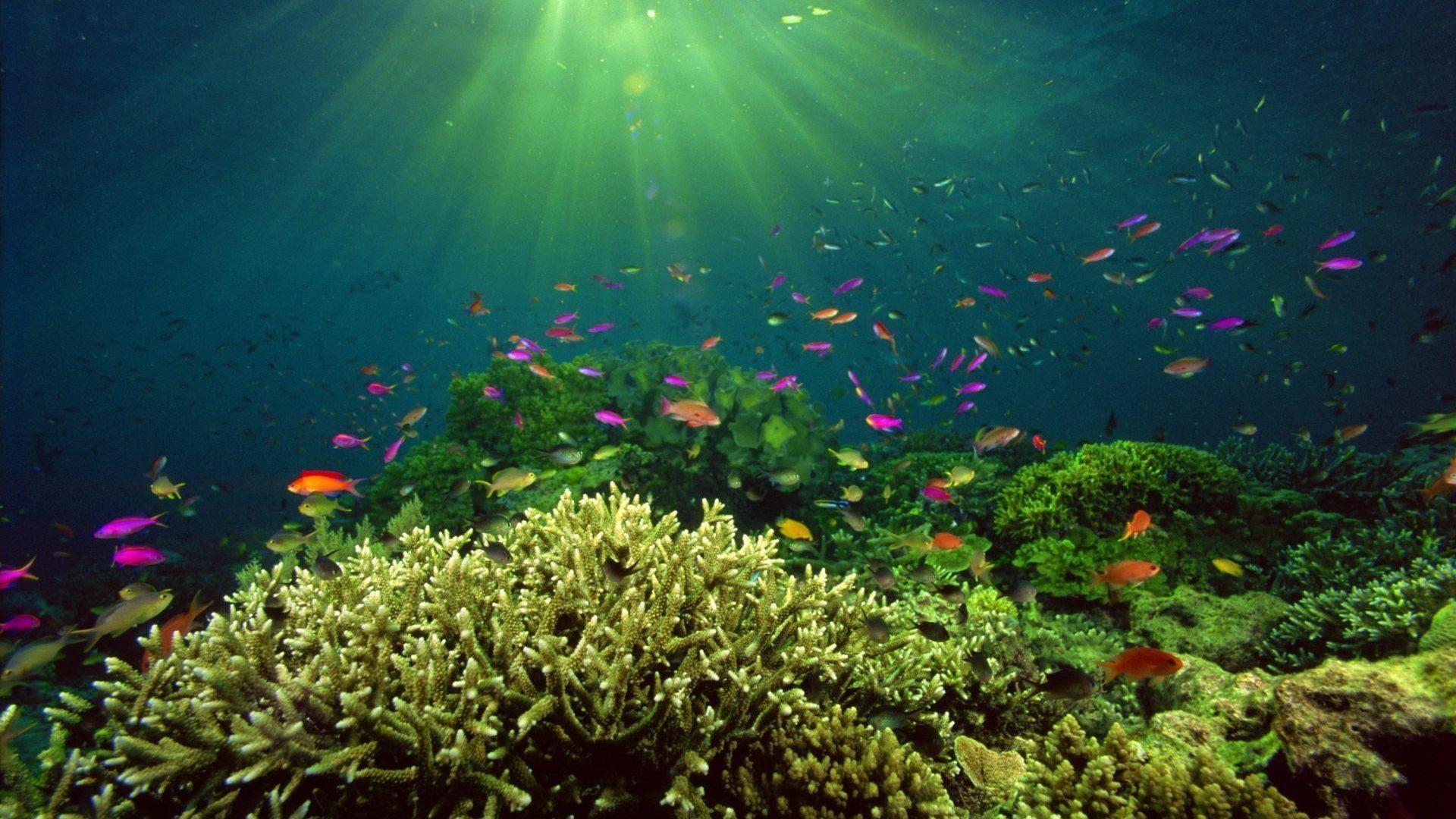 Tropical Ocean 3d Live Wallpaper Coral Reef Live Wallpaper 59 Images