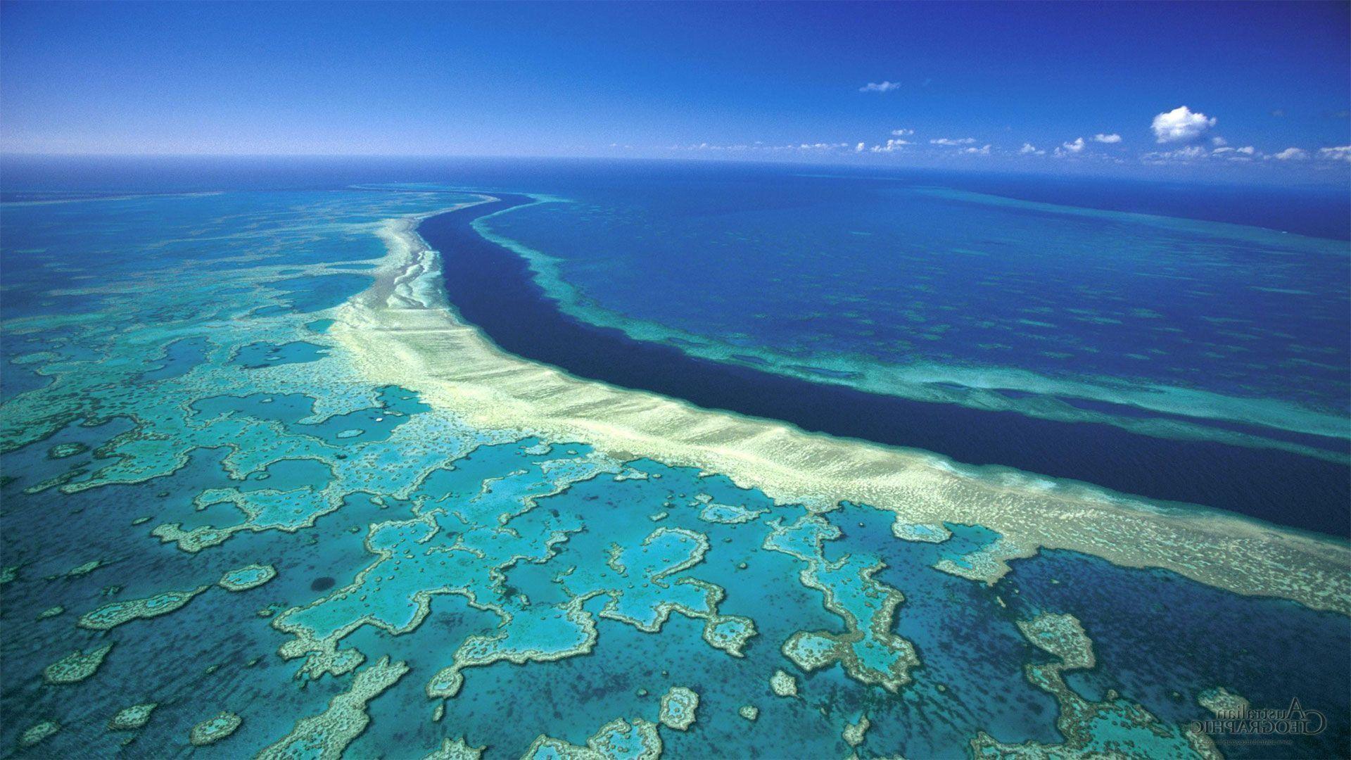 Apple Clownfish Wallpaper Iphone X Great Barrier Reef Wallpaper 61 Images