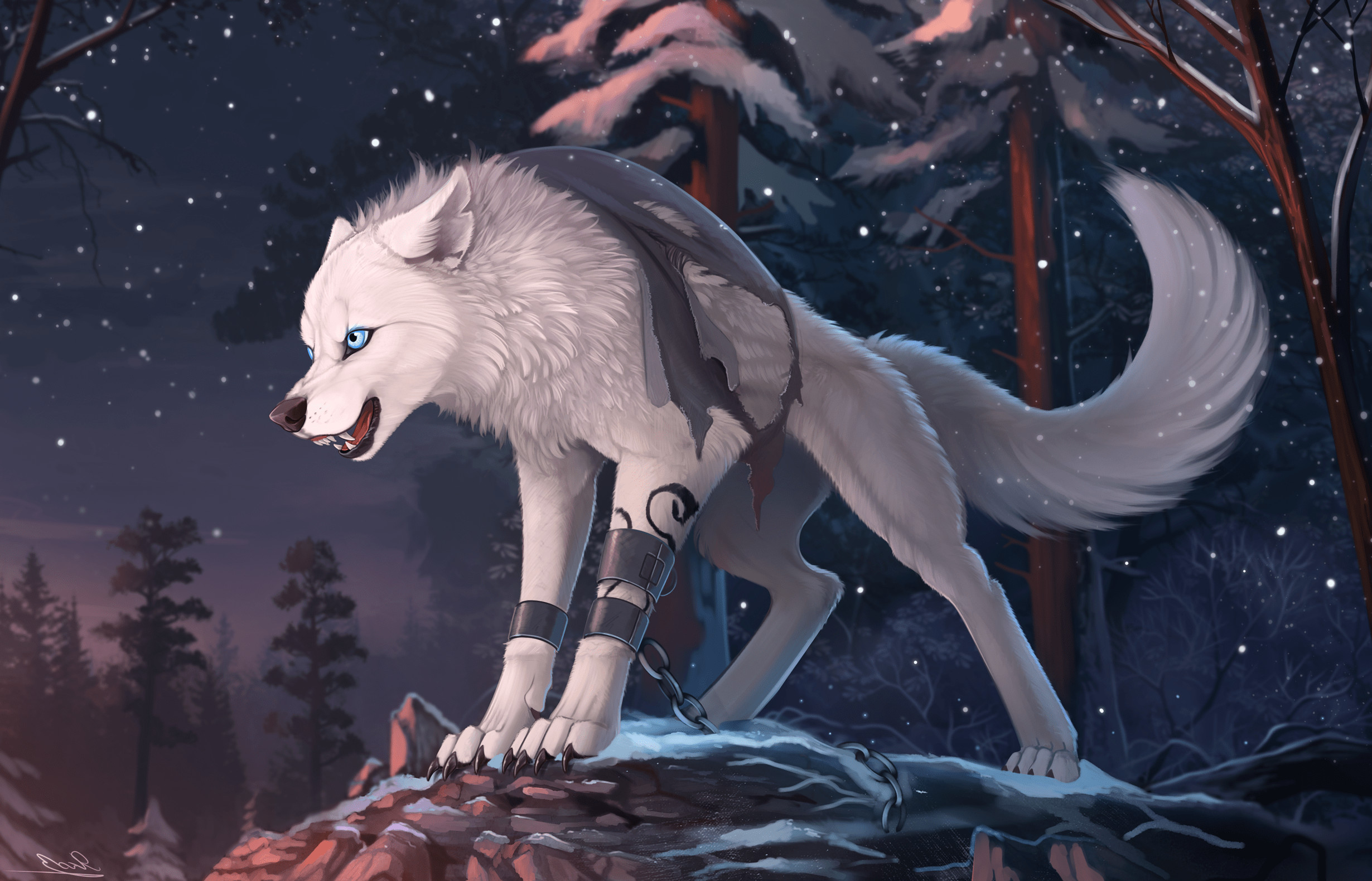 Forest Animal Wallpaper Furry Wolf Wallpaper 75 Images