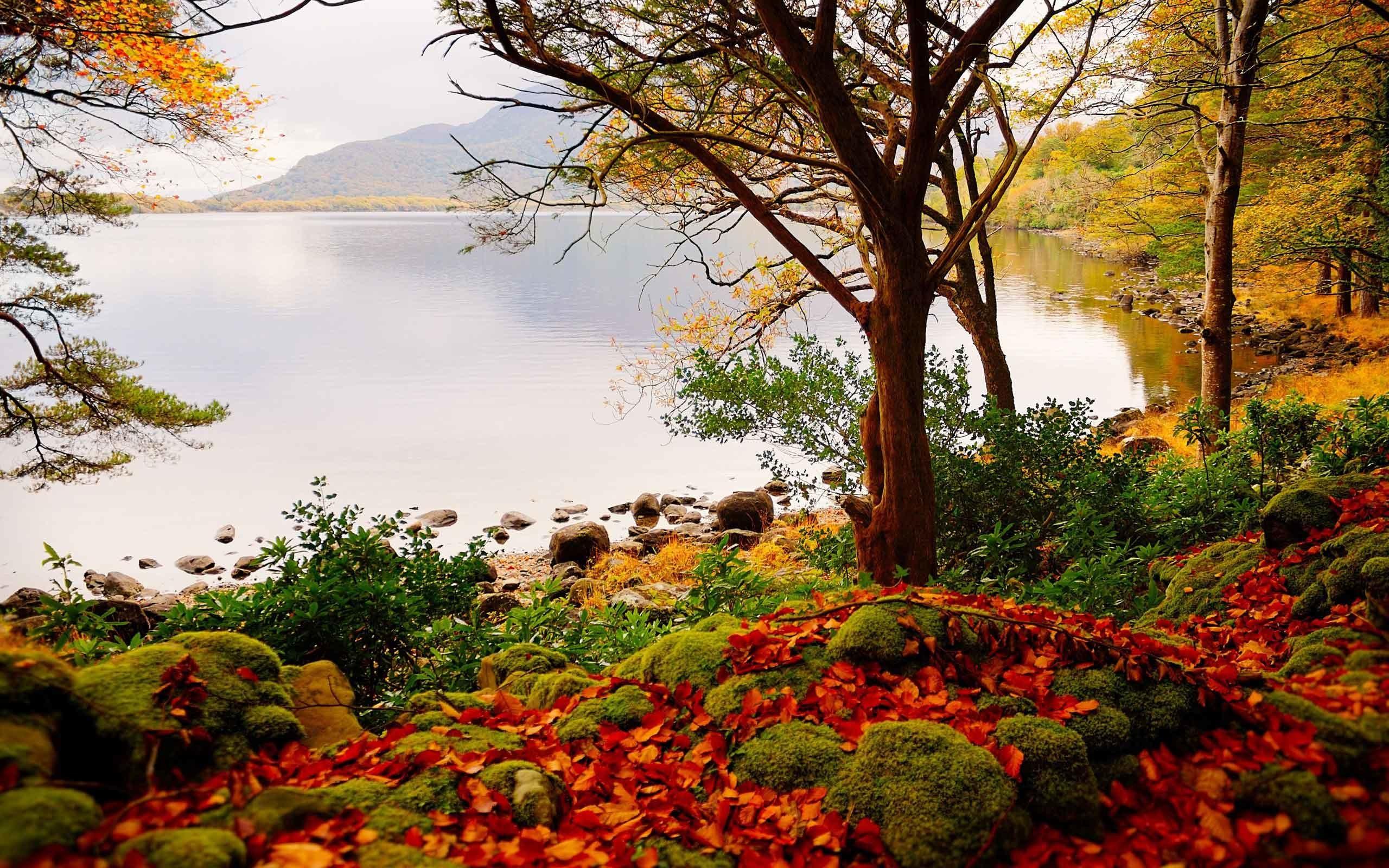 Birch Tree Fall Wallpaper Autumn Landscape Wallpaper 69 Images