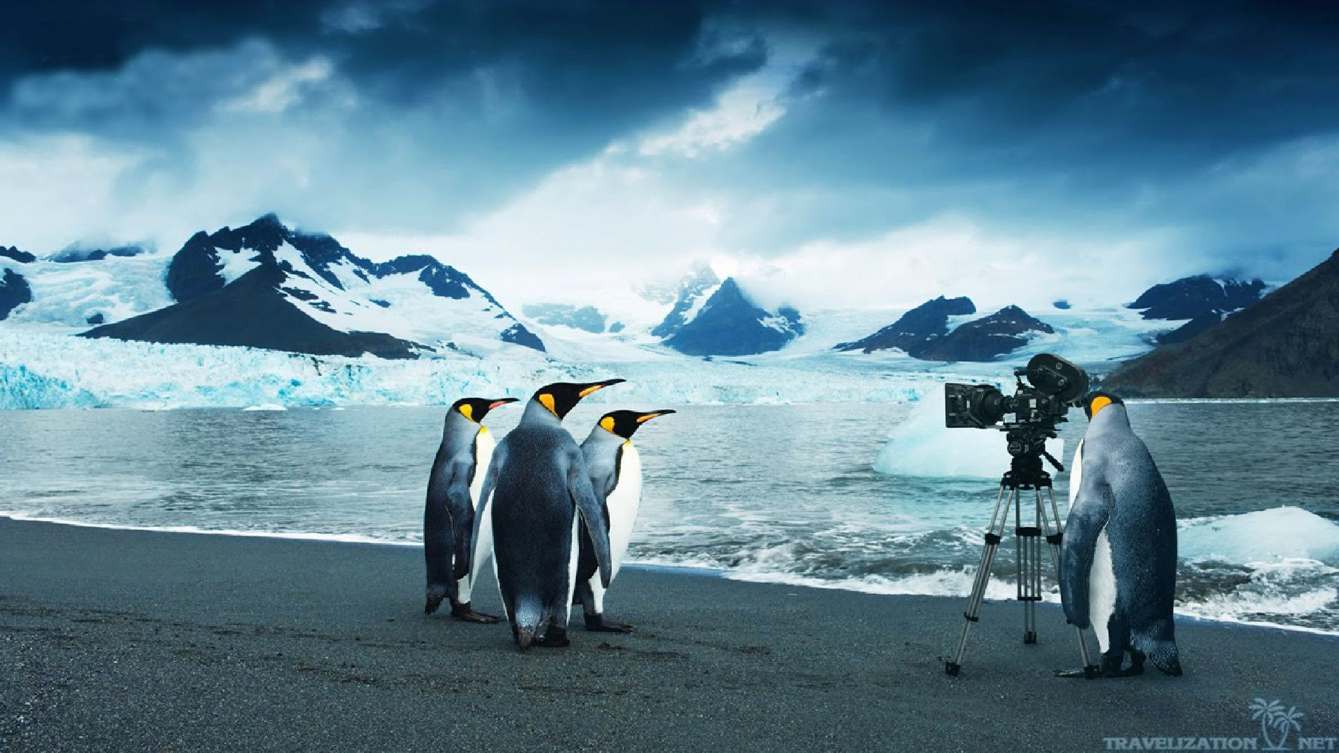 Cute Penguins Iphone Wallpaper Moving Penguin Wallpapers 52 Images