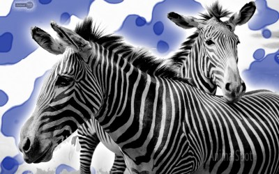 Animal Desktop Wallpaper Background (63+ images)