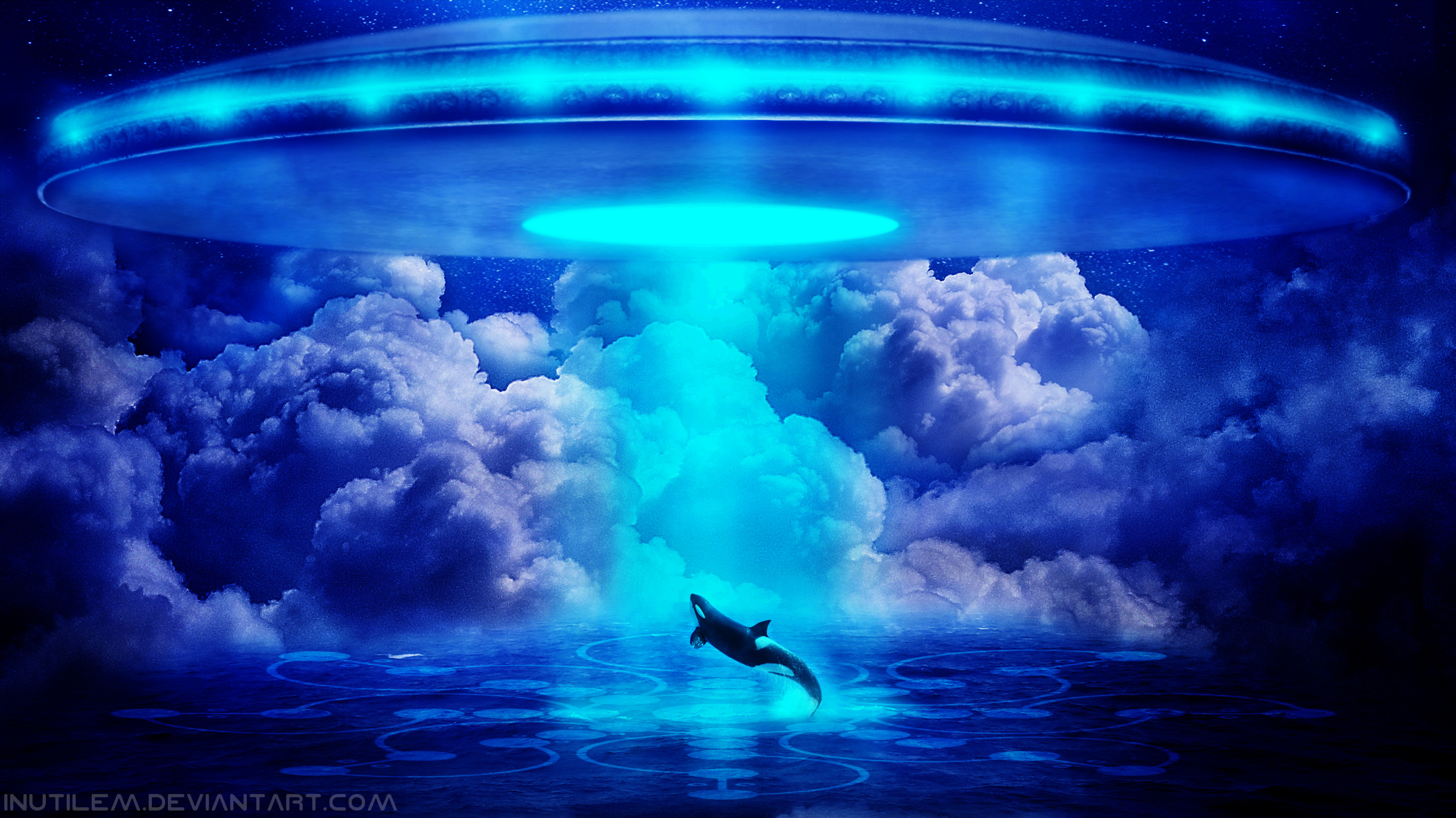 3d Dolphin Wallpaper For Windows 7 Orca Whale Wallpaper 56 Images