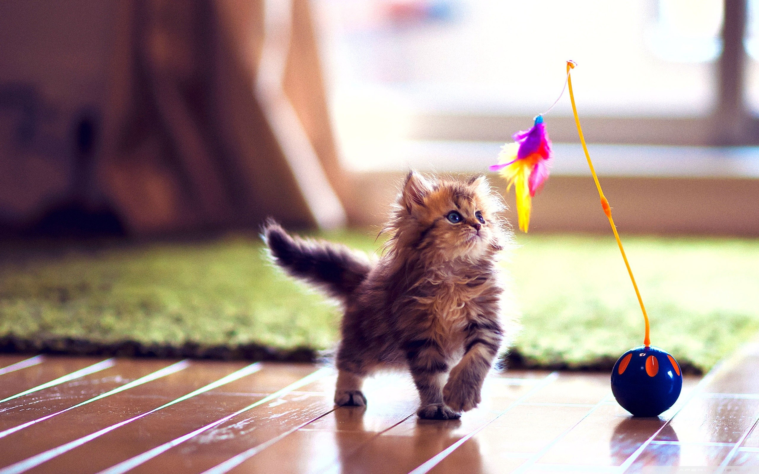 Cute Wallpapers Puppy Drawing Kittens Screensavers Wallpaper 48 Images