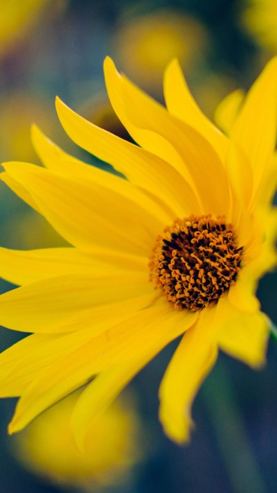 Yellow Flower Wallpaper (67+ images)