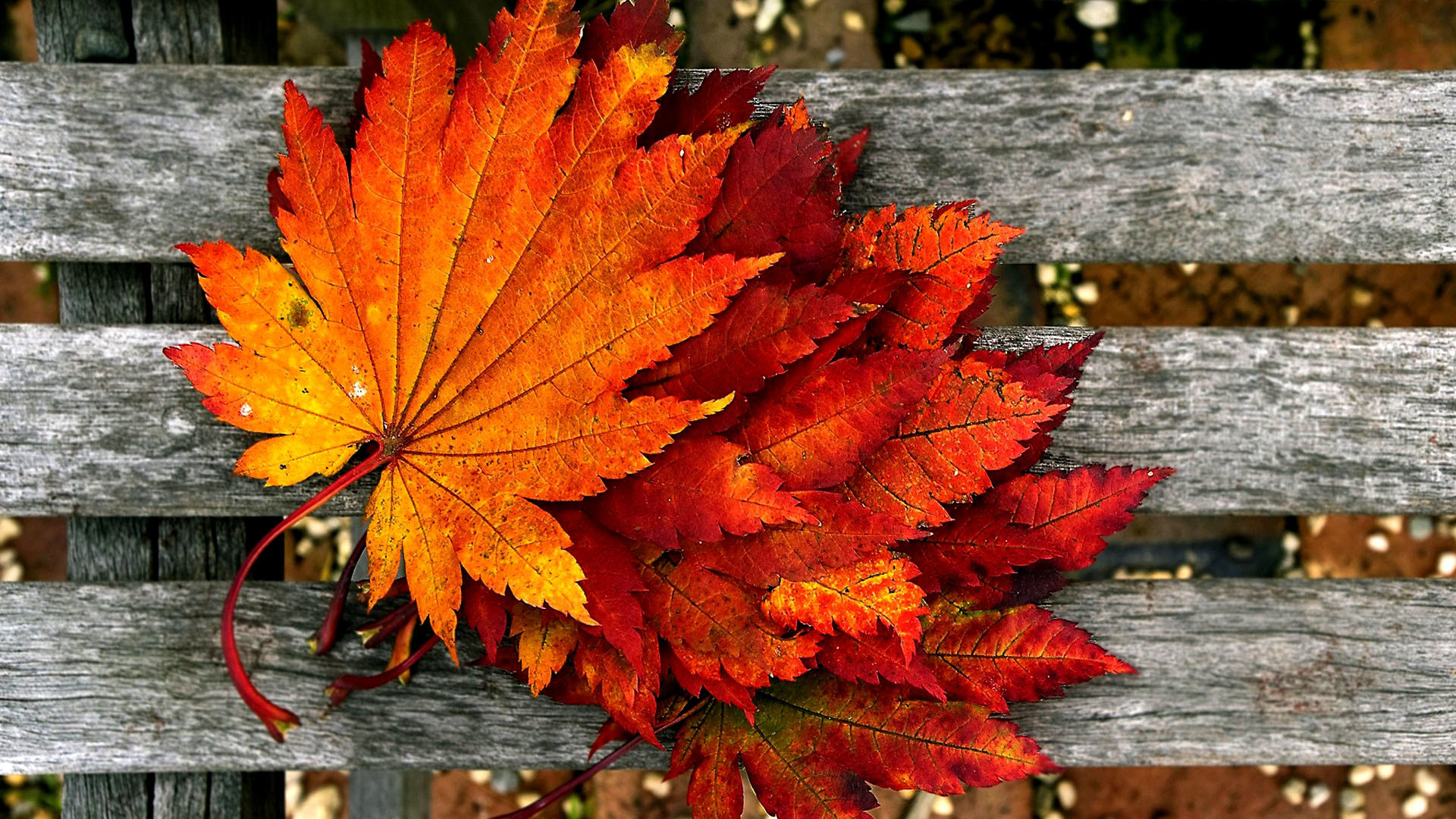 Fall Flowers And Pumpkins Wallpaper 1920x1080 Hd Autumn Wallpapers 61 Images