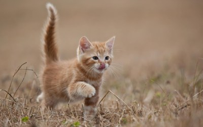 Cute Kitten Desktop Wallpaper (60+ images)