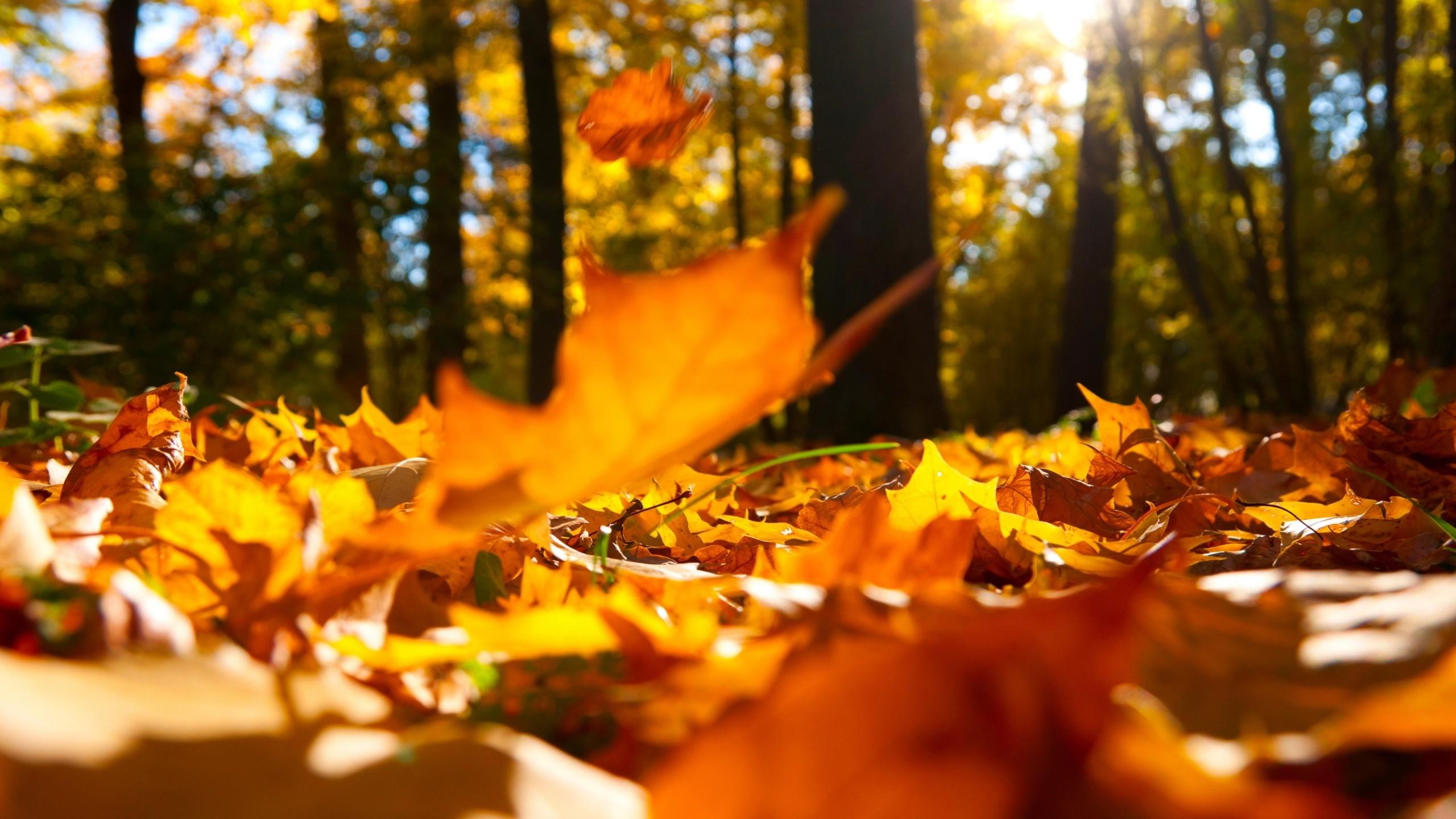 High Resolution Wallpaper Fall Leaves Christian Autumn Wallpaper 36 Images