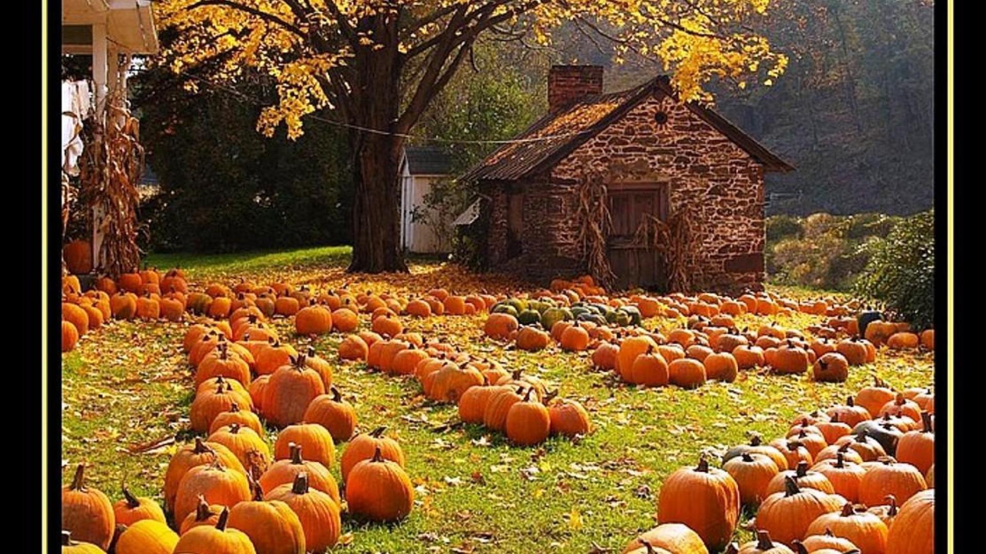 Hd Wallpaper Texture Fall Harvest Fall Harvest Wallpaper 54 Images