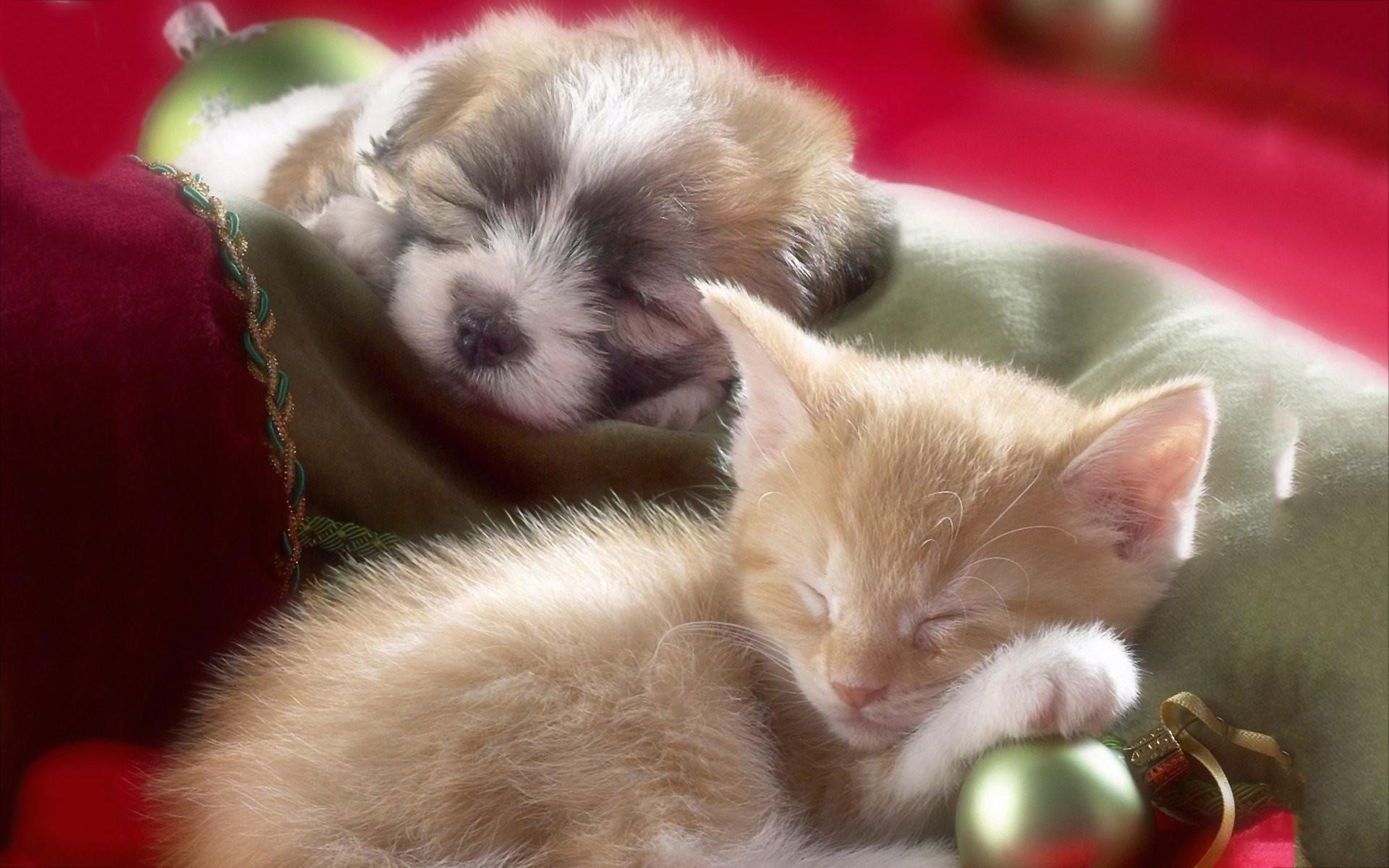 Cute Little Kitten Desktop Wallpapers Cute Puppy And Kitten Wallpapers 58 Images