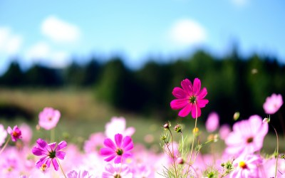 Computer Backgrounds Flowers (50+ images)