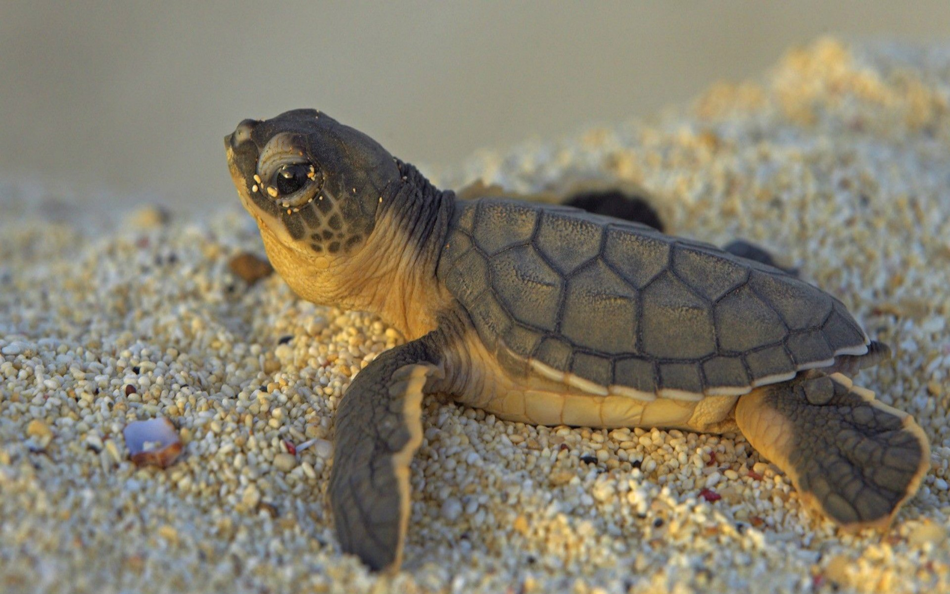 3d Animal Wallpapers Desktop Free Download Cute Turtle Wallpaper 59 Images