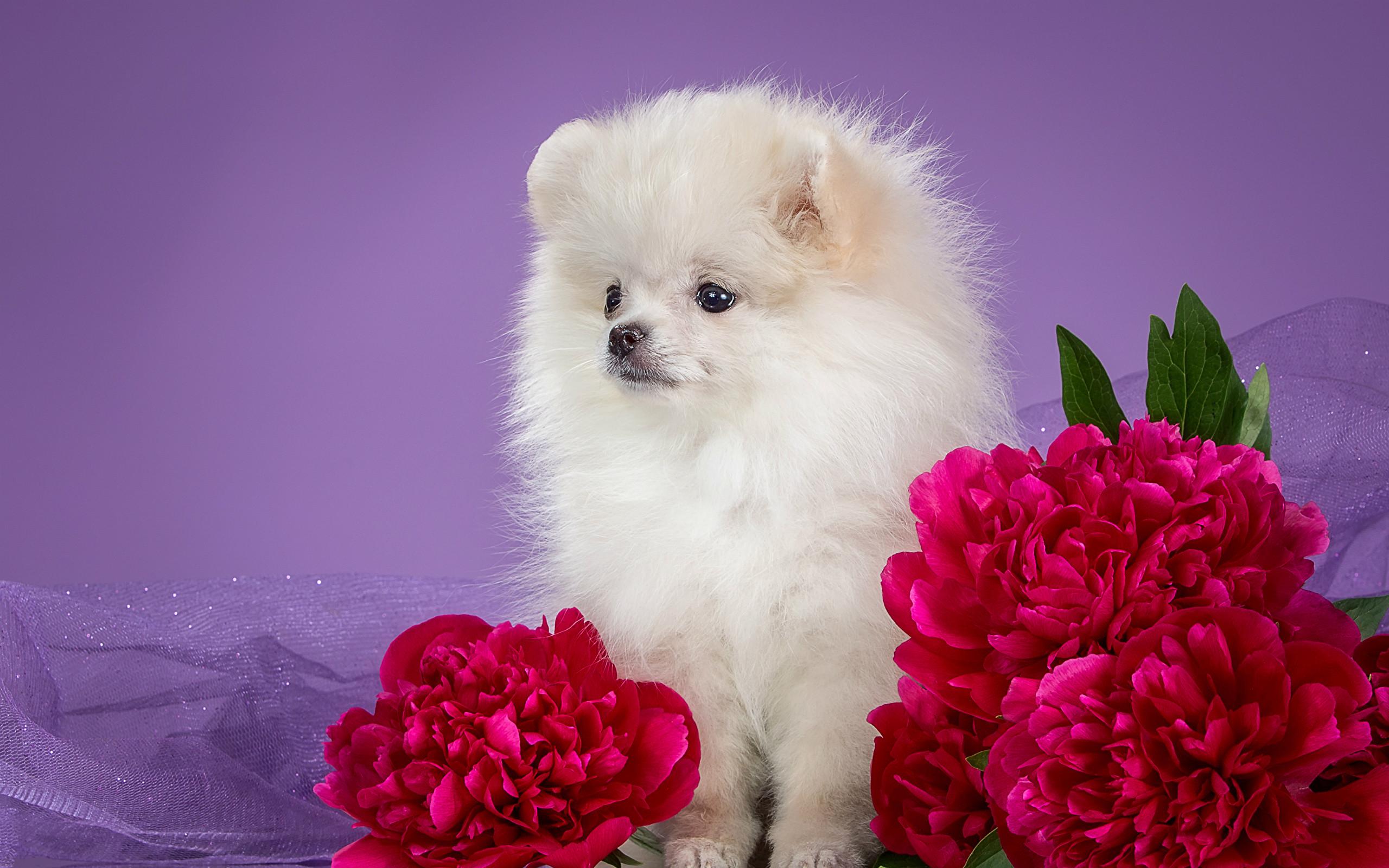 Cute Husky Wallpaper Hd Puppies In Flowers Computer Wallpaper 50 Images