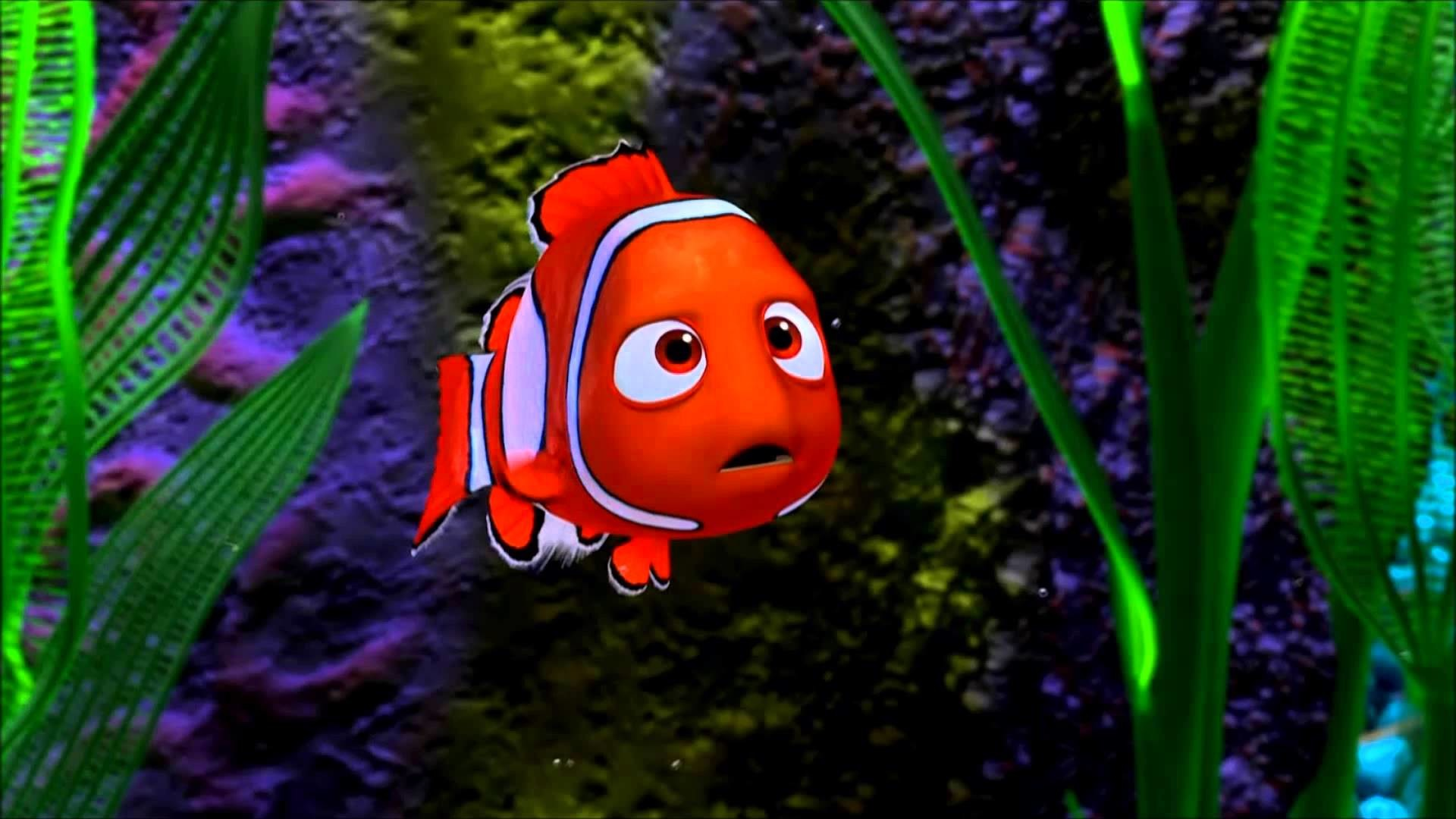 Fish Animation Wallpaper Free Download Hd Nemo Wallpapers 61 Images