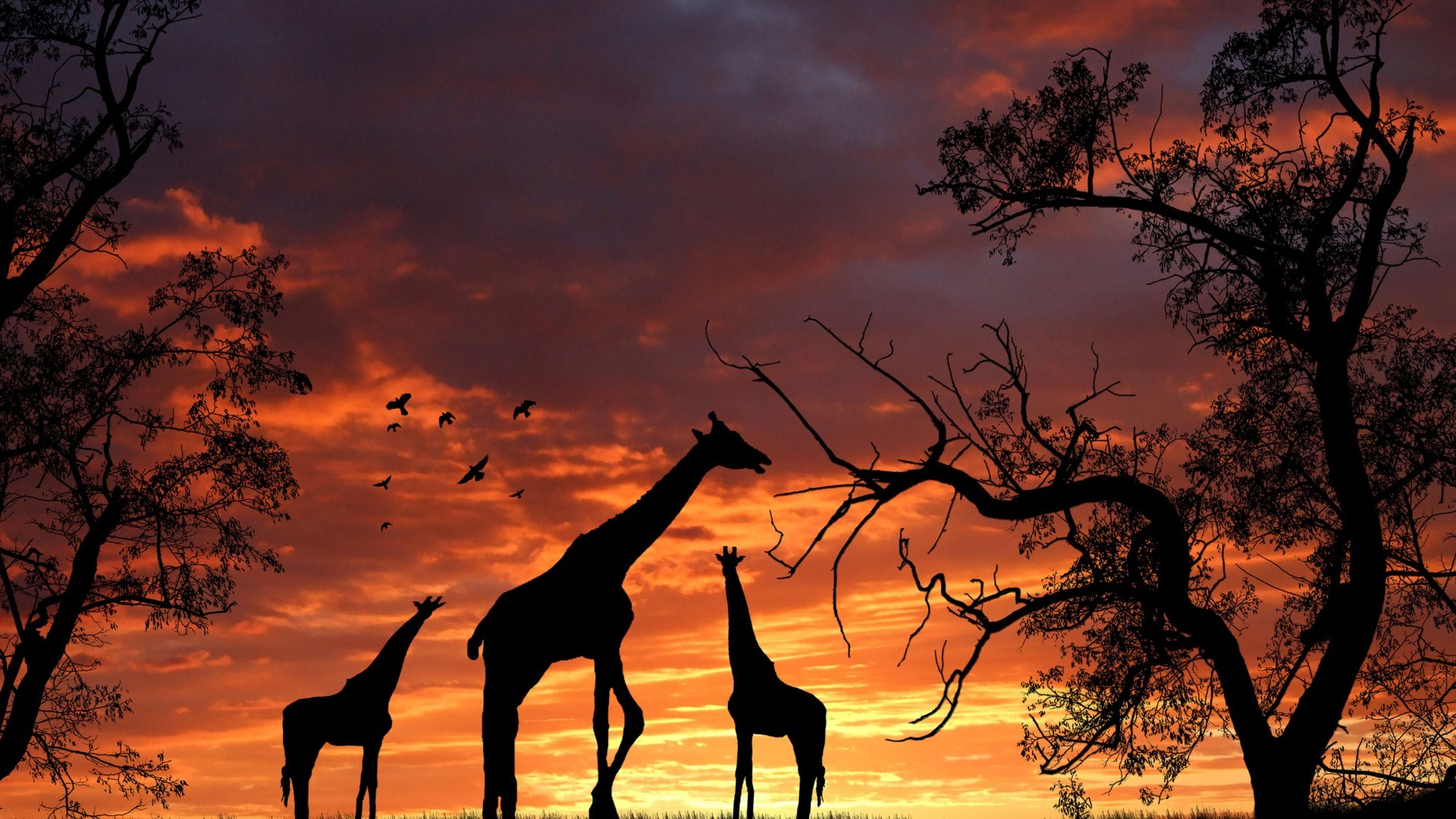 Hd Fall Wallpapers Phone Giraffes Wallpapers 78 Images
