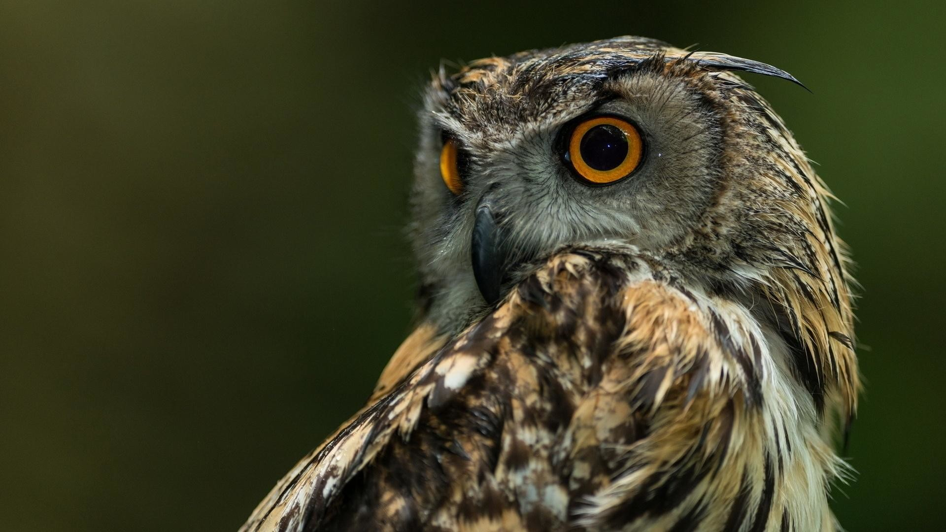Free Cute Owl Wallpapers Owl Wallpapers High Resolution 64 Images