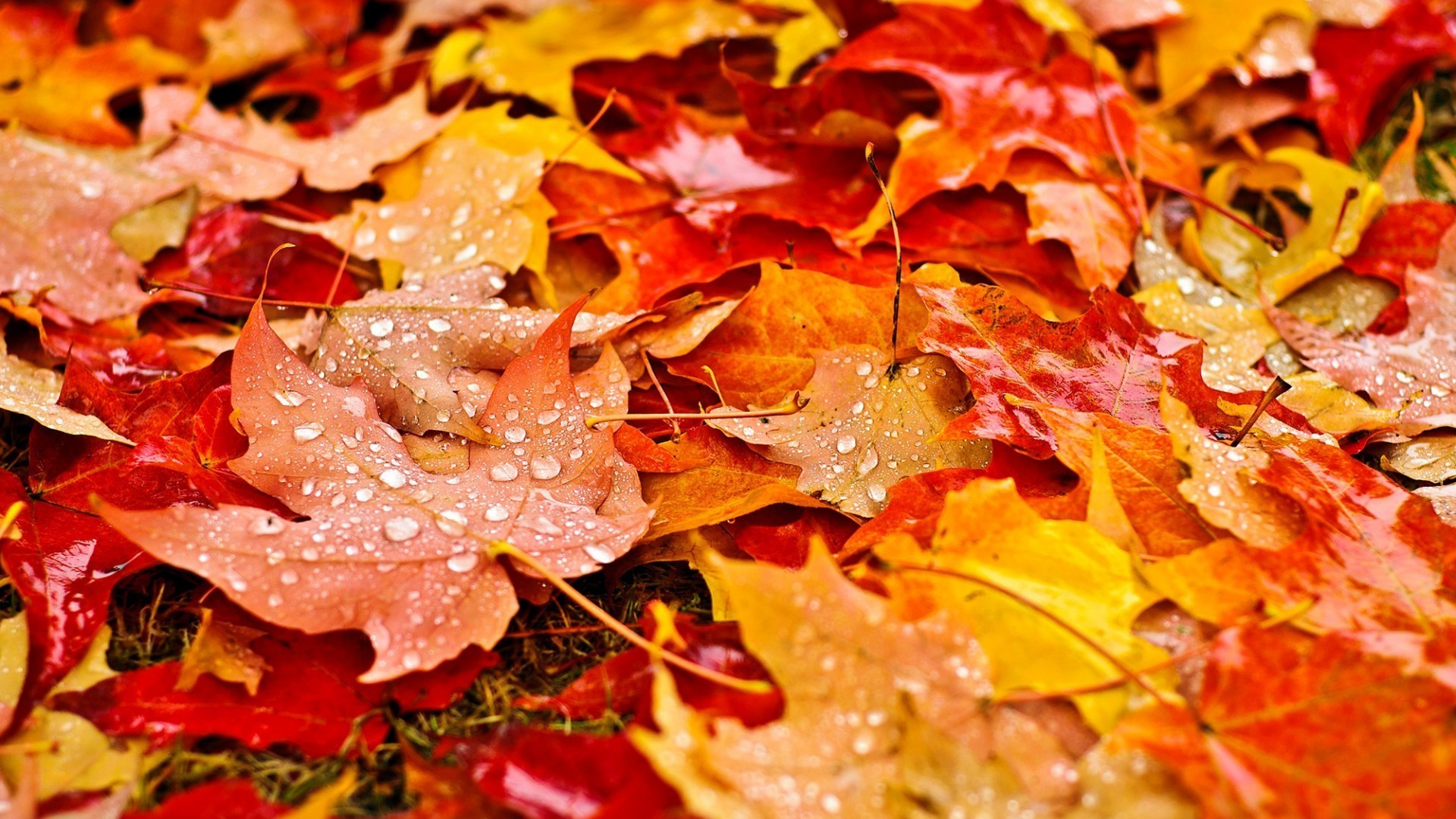 Fall Leaves Fox Wallpaper Fall Wallpaper Backgrounds With Pumpkins 55 Images