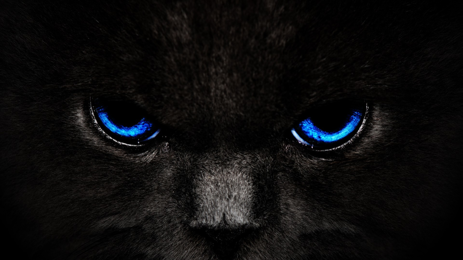 Best Looking Cars Wallpapers Black Panther Blue Eyes Wallpaper 60 Images