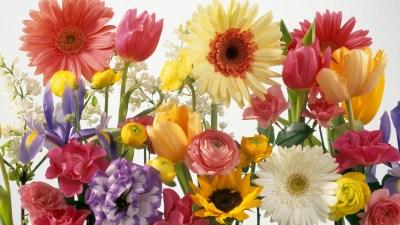 Spring Desktop Backgrounds Wallpapers (75+ images)