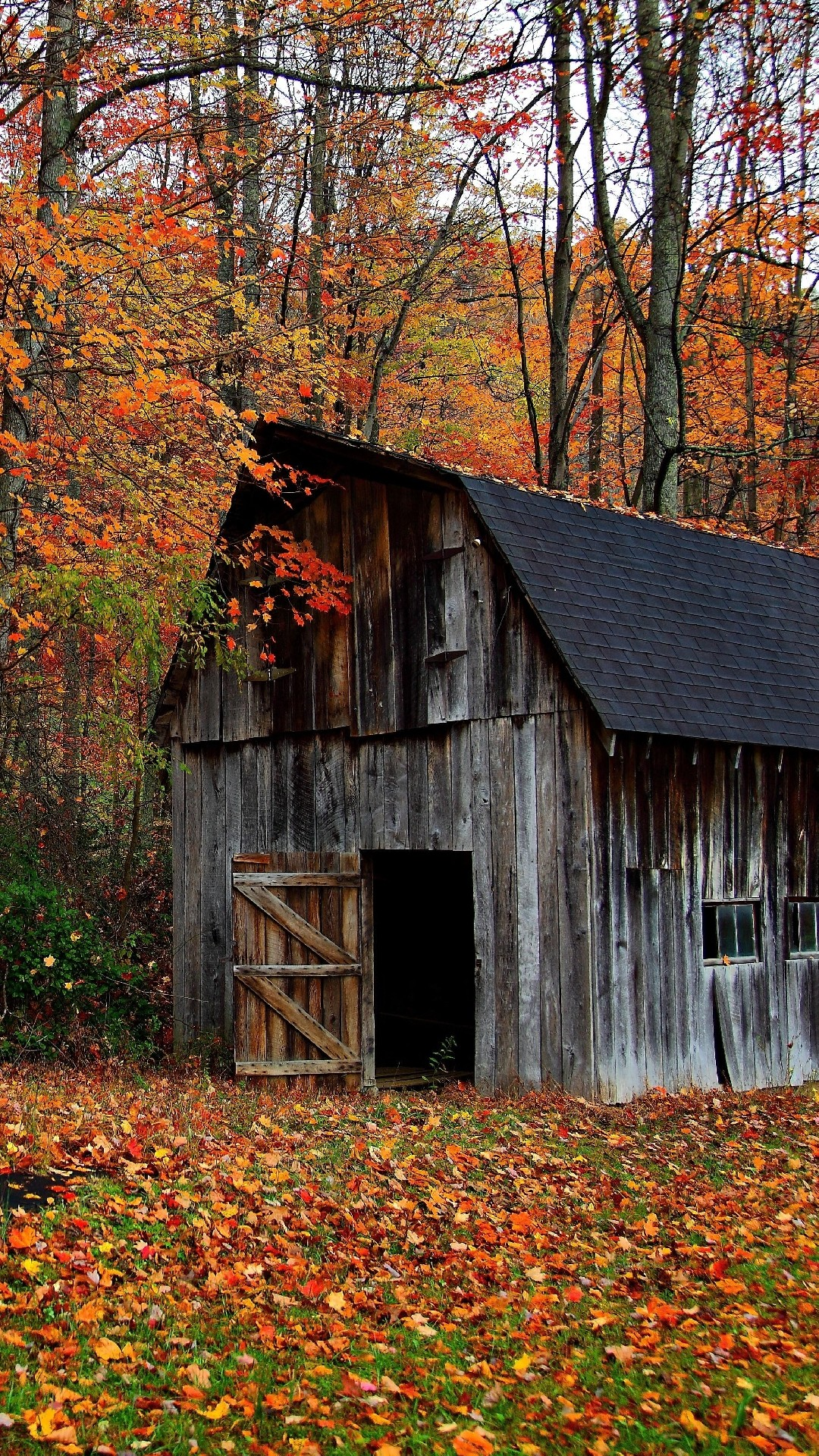 Free Fall Wallpaper For Pc Old Barn Wood Wallpaper 41 Images