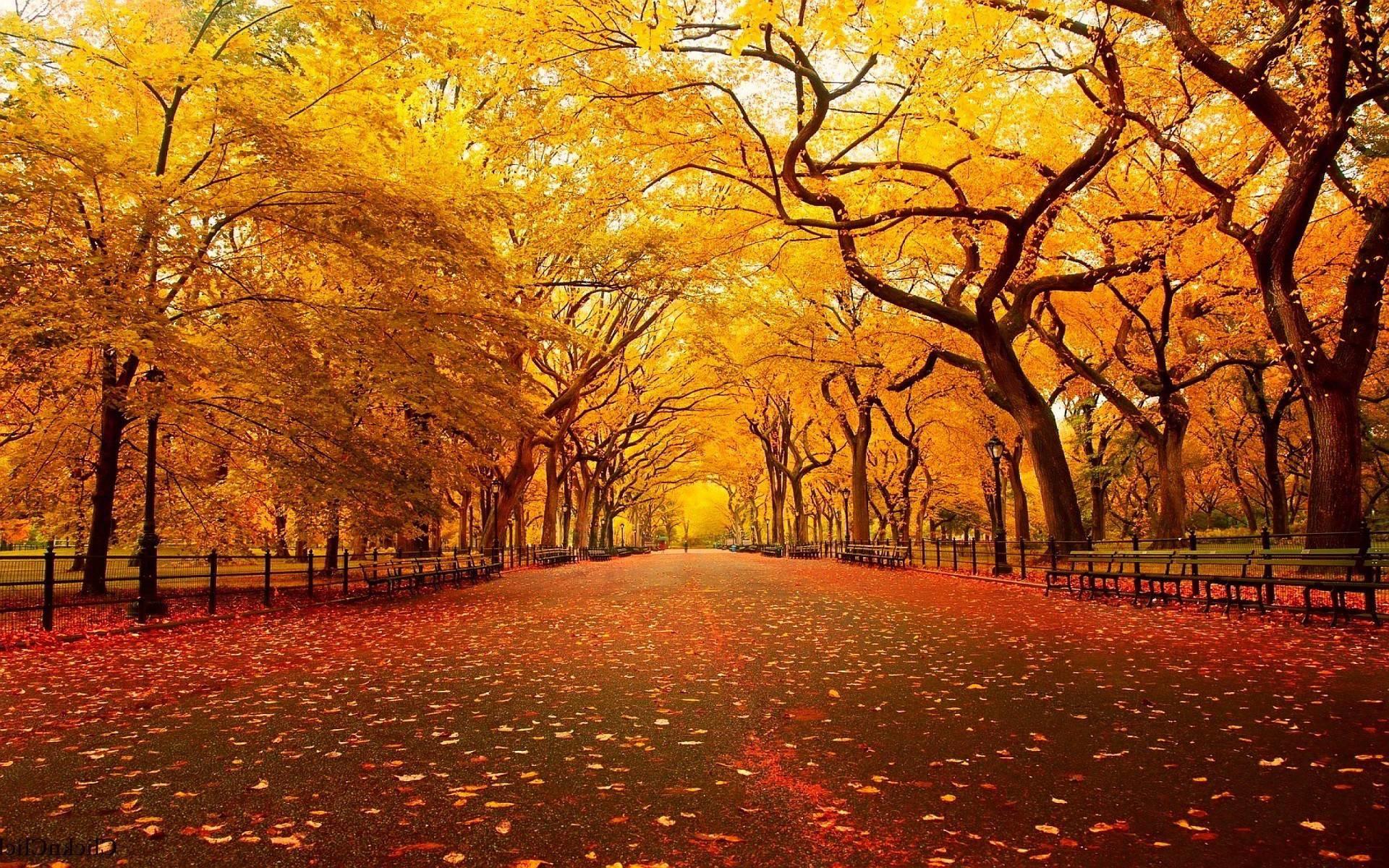 Free Fall Christian Desktop Wallpaper Christian Autumn Wallpaper 36 Images