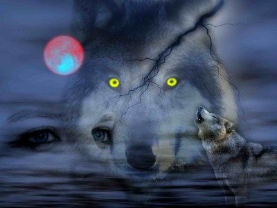 Cool Pictures of Wolves Wallpapers (59+ images)