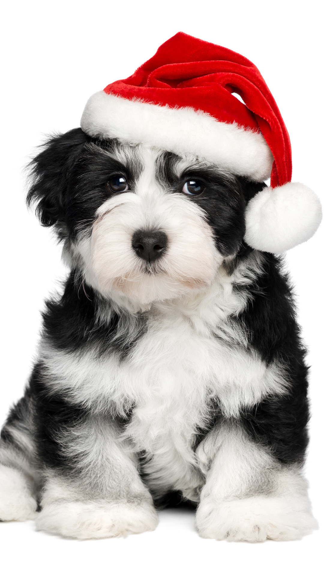 Cute Puppy Wallpapers For Iphone Christmas Puppy Wallpaper 48 Images