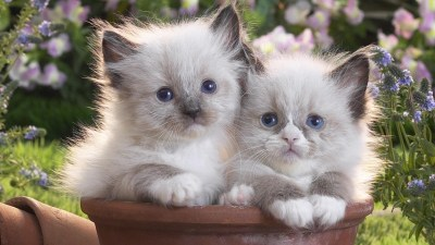 Baby Kitten Wallpapers (59+ images)