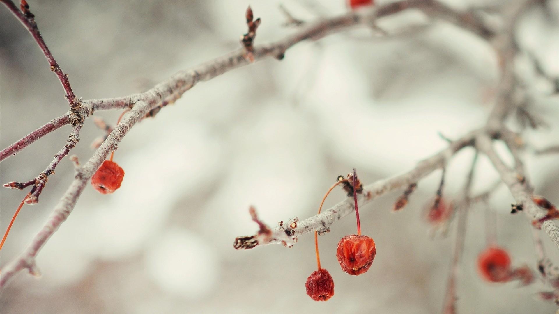 Cute Downloadable Wallpapers Winter Desktop Wallpaper 54 Images